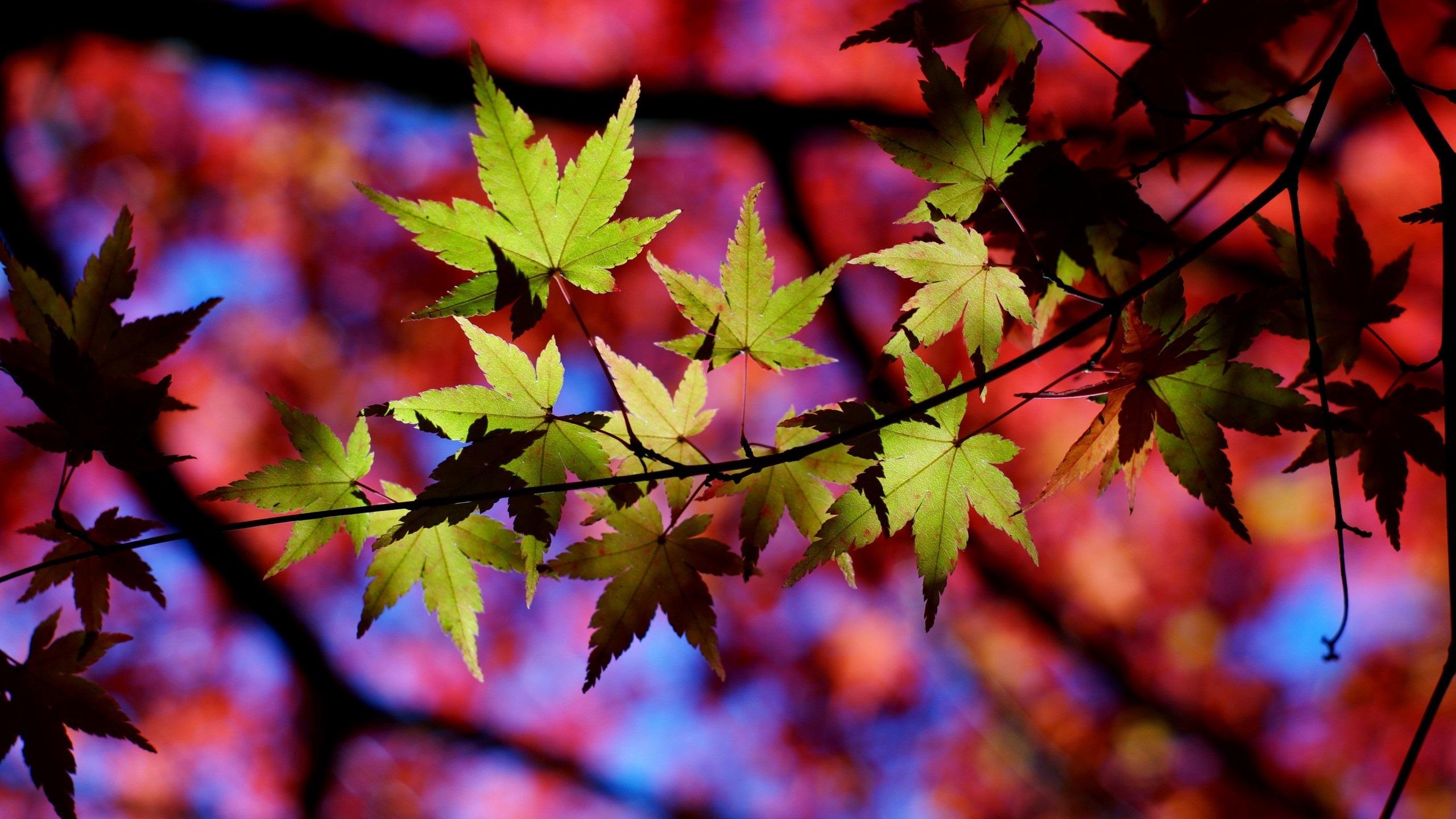 Fonds d 39 cran t l charger 2560x1440 automne arbre for Fond ecran qhd