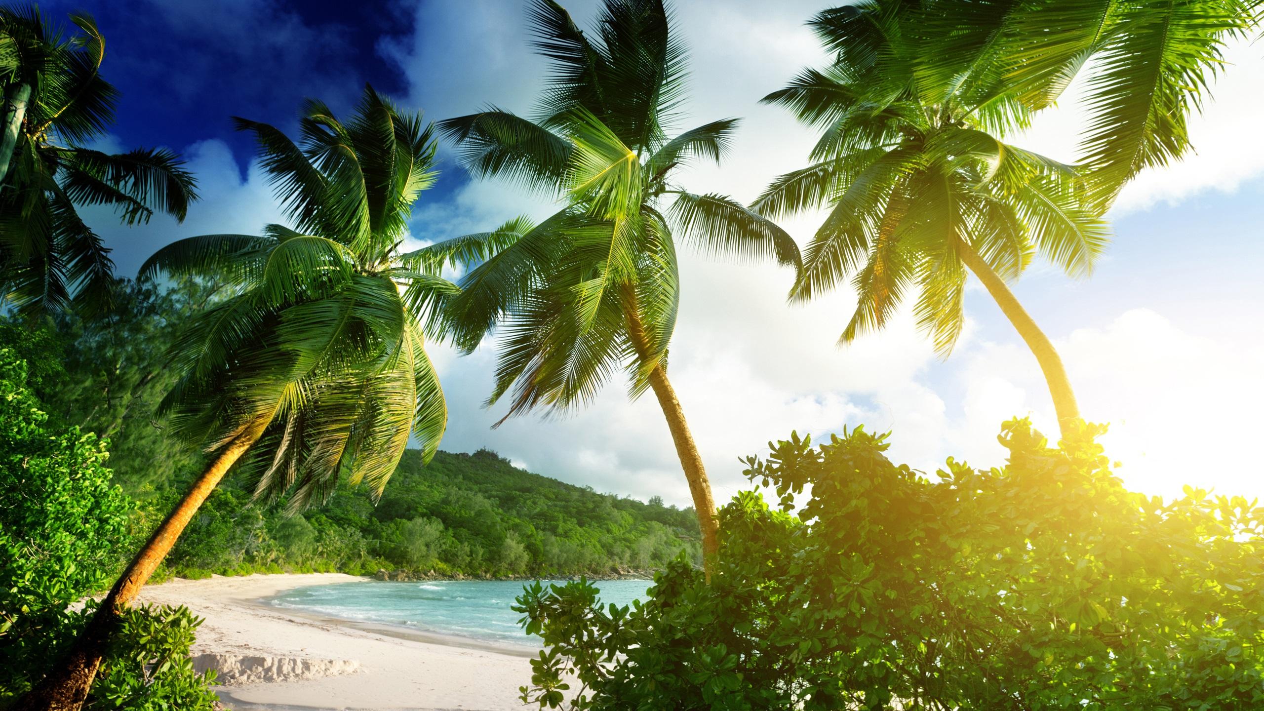 Shore Palms Tropical Beach 4k Hd Desktop Wallpaper For 4k: Download Hintergrundbilder 2560x1440 QHD Seychellen, Mahe