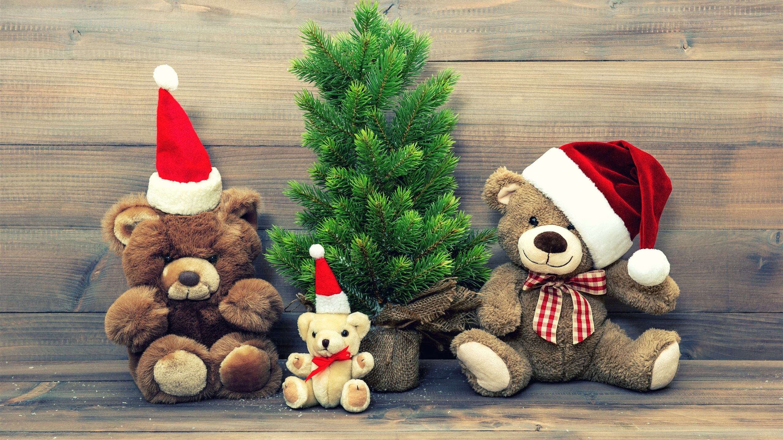 Wallpaper Merry Christmas Hat Decoration Teddy Bear 2560x1440 Qhd Picture Image