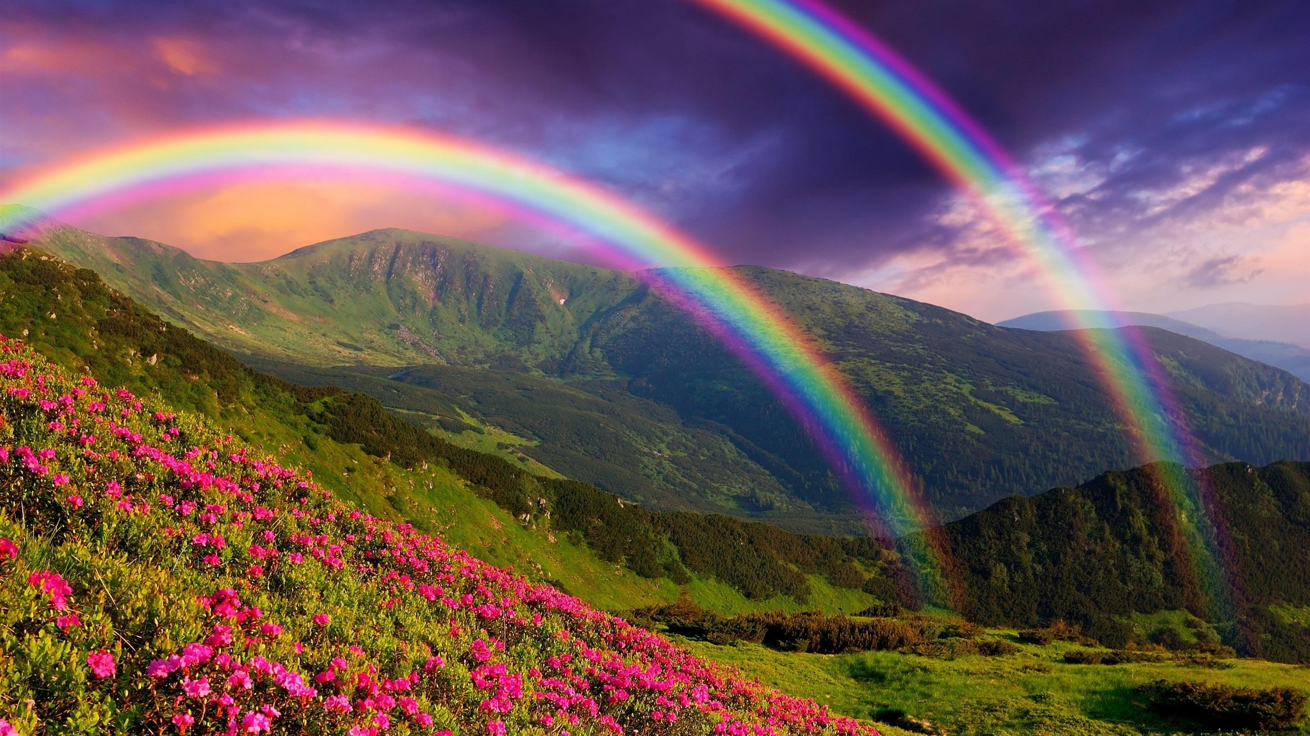 принципе фото природа цветы радугой природе, детки