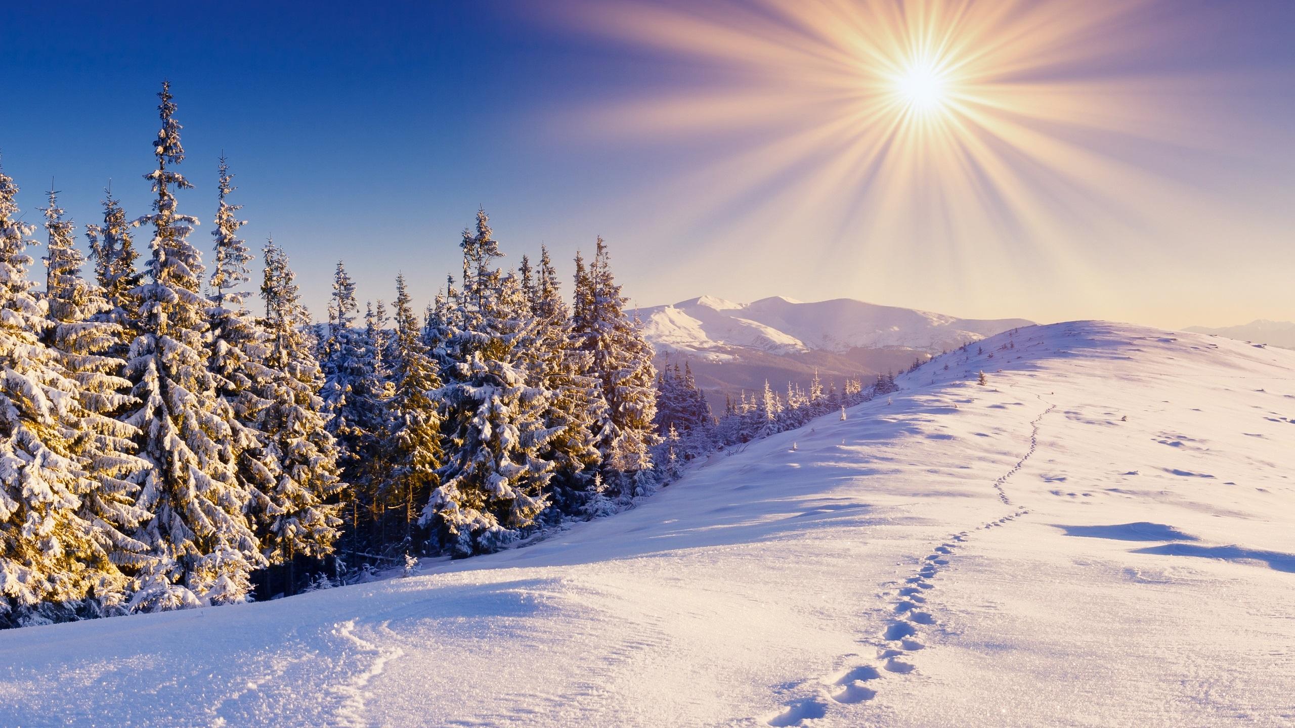 Wallpaper Winter Snow Forest Trails Mountains Sky Sun