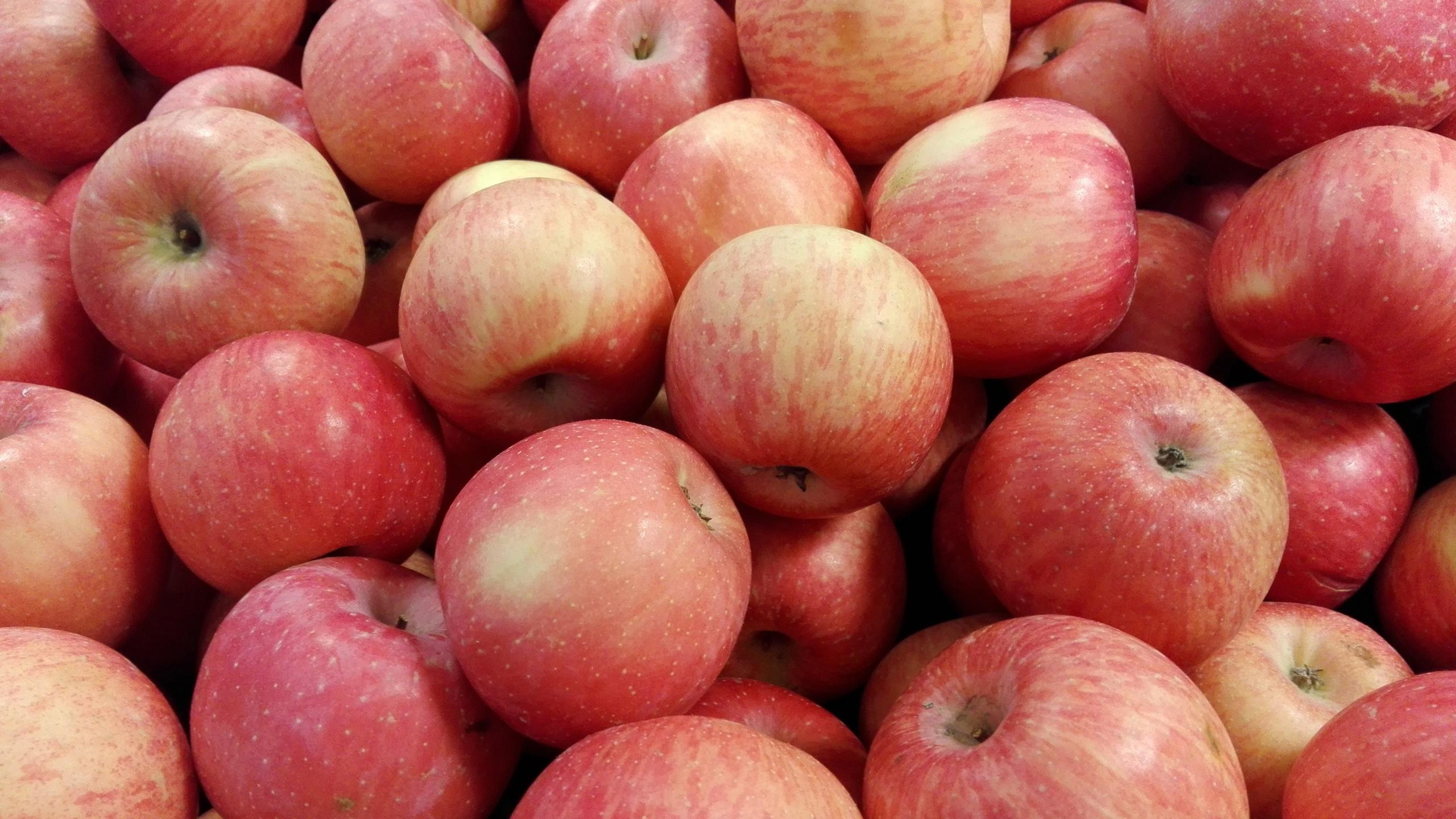 Fonds Décran Beaucoup De Pommes Rouges 2560x1440 Qhd Image