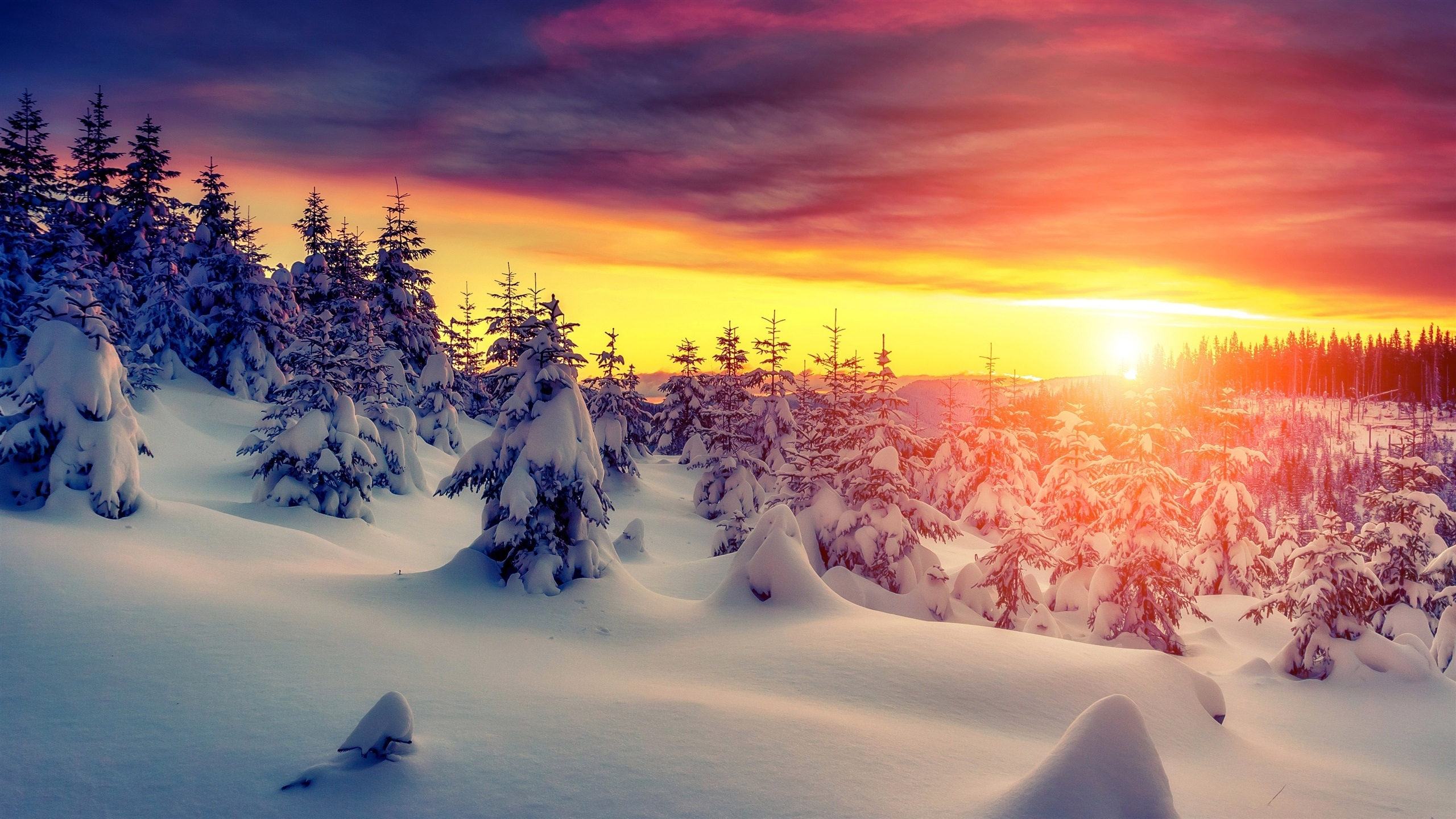Wallpaper Sunset Winter Thick Snow Trees 2560x1440 Qhd Picture Image