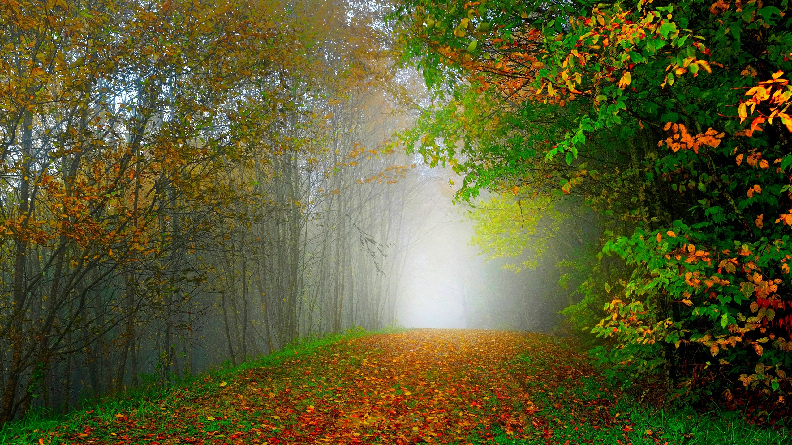 Wallpaper Morning, nature scenery, forest, trees, colorful leaves ...