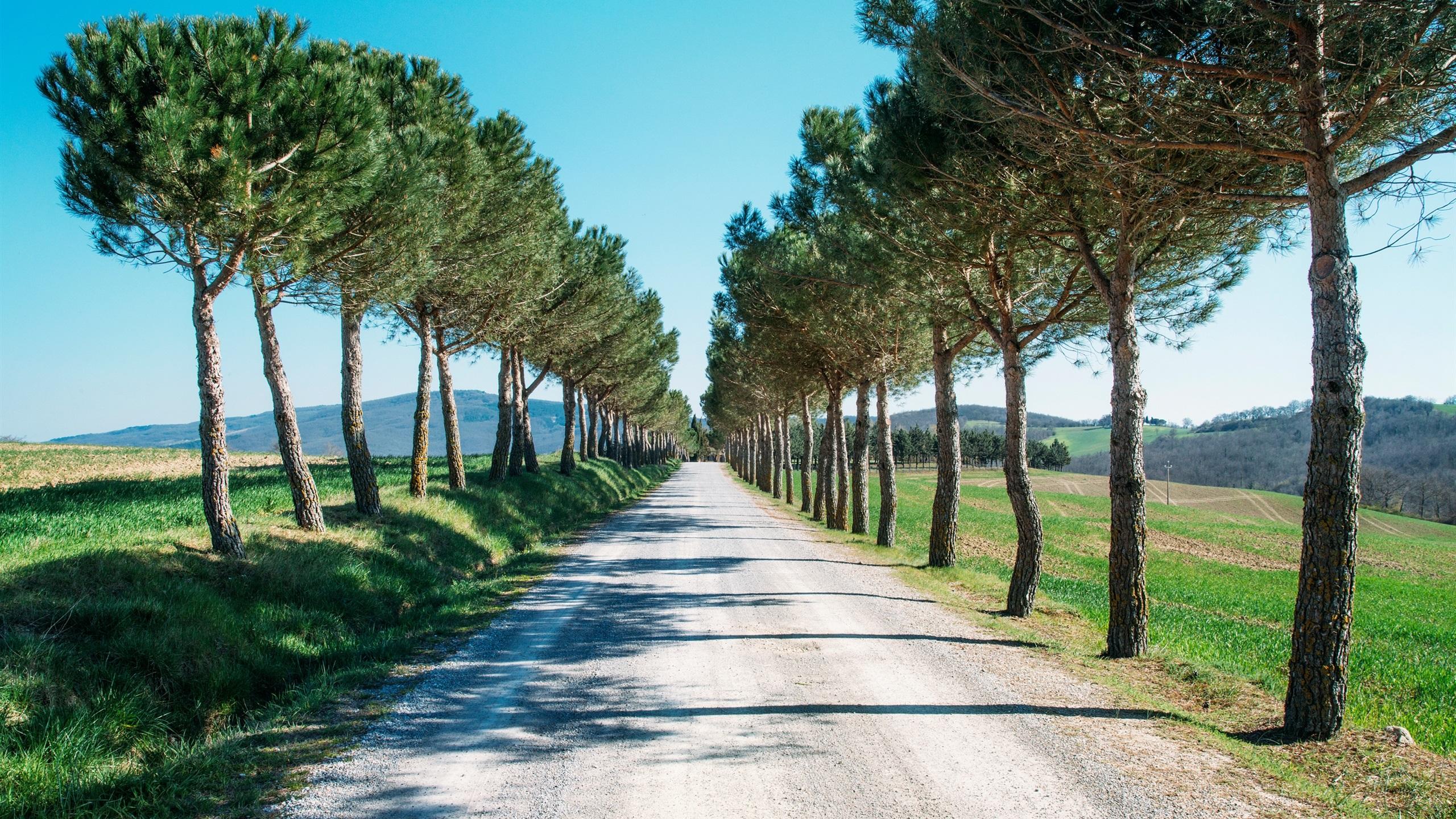 Route arbres conif res fonds d 39 cran 2560x1440 qhd for Fond ecran qhd
