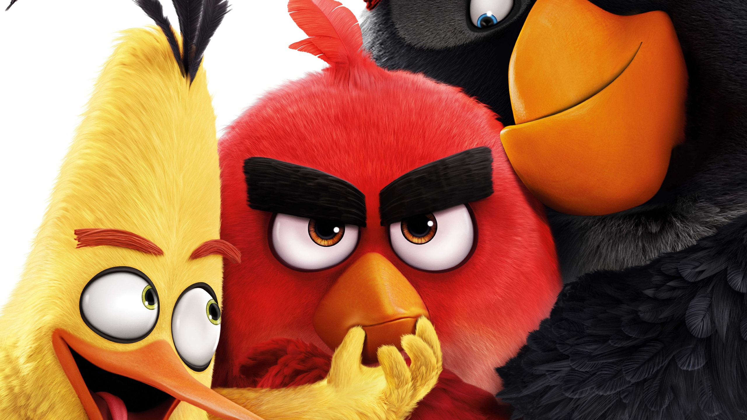 Wallpaper Angry Birds 2016 Movie 2560x1920 Hd Picture Image