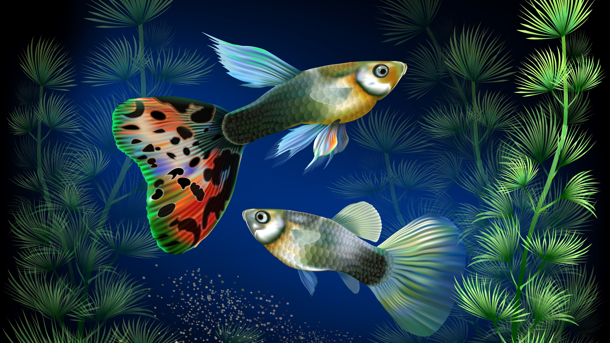 аквариумные рыбки картинки на телефон отмечает