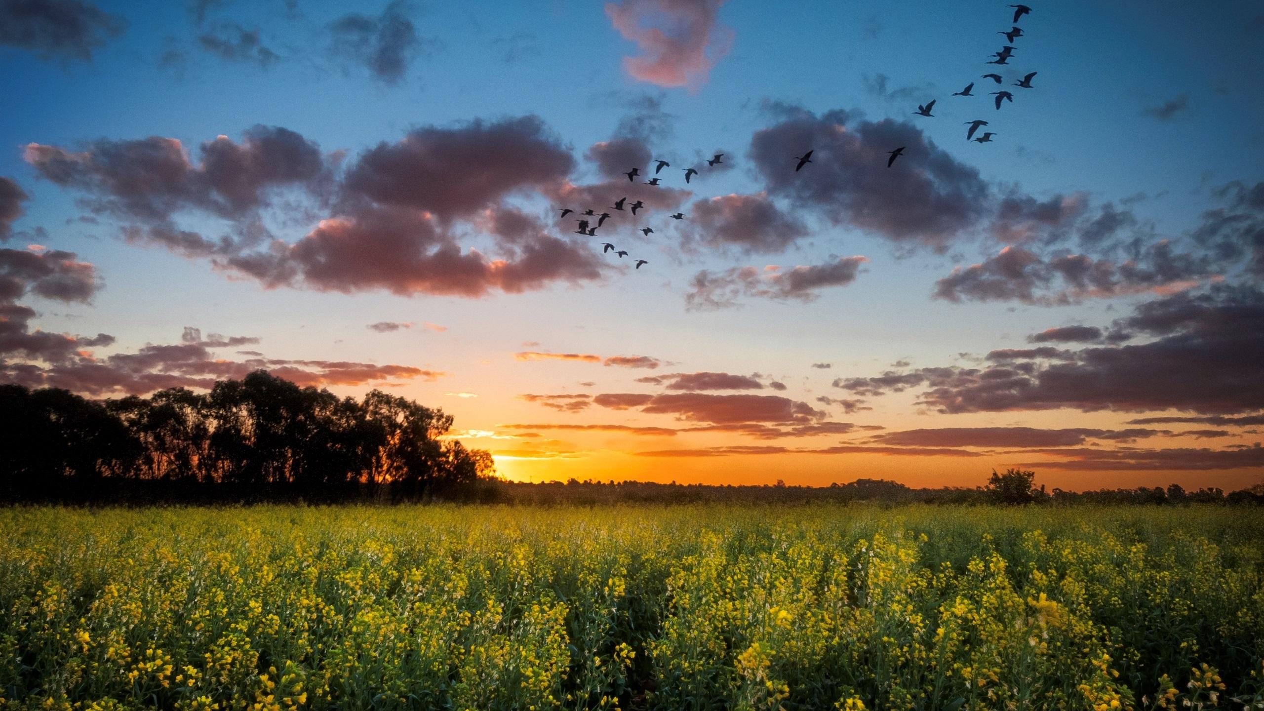 красный закат над полем скачать