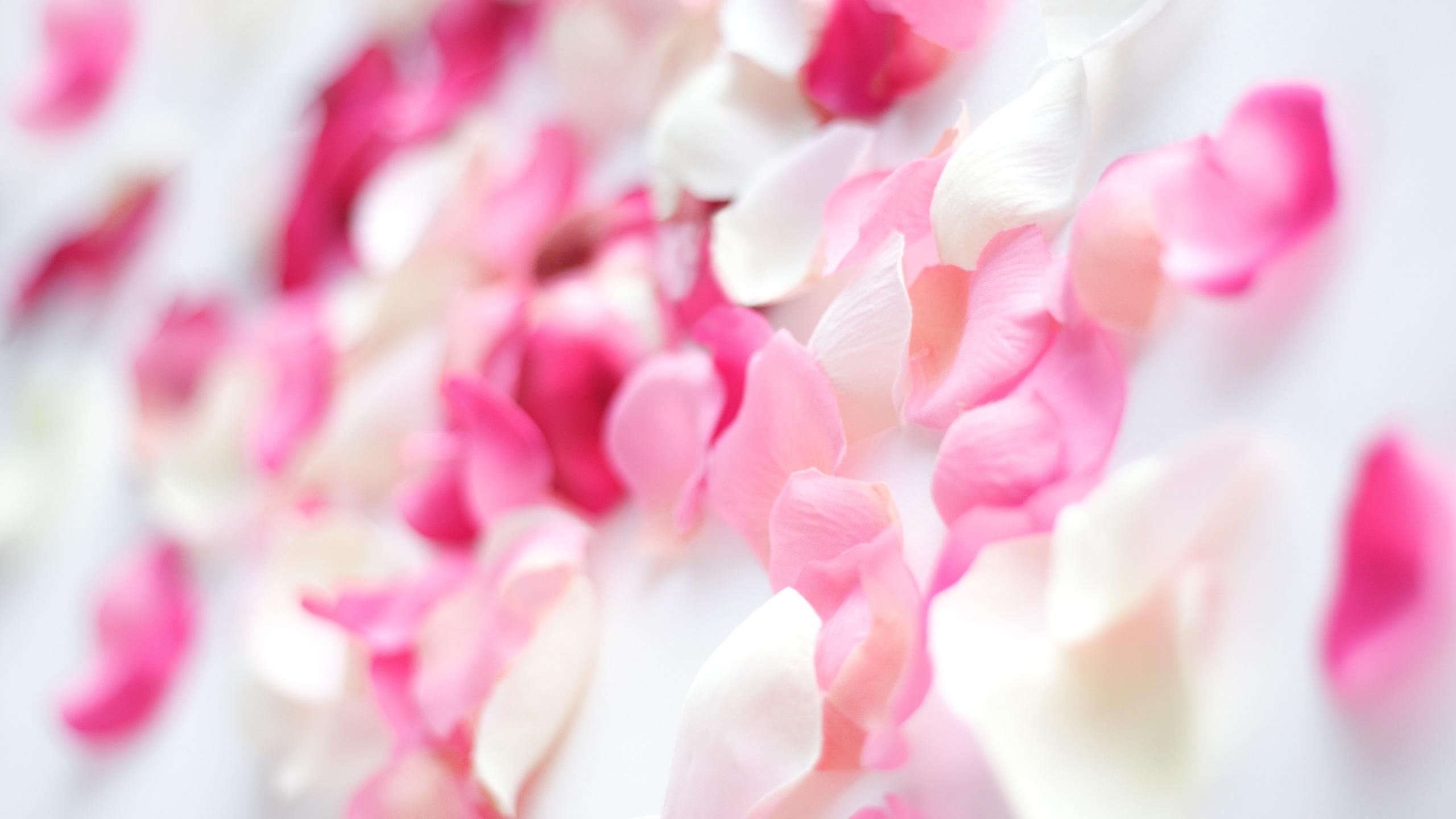 Как сделать розовые лепестки 662