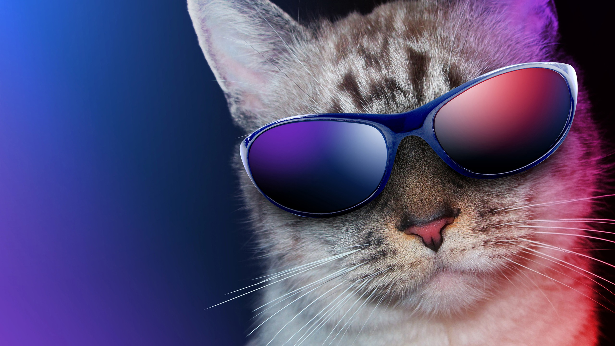 Cool Cat With Glasses Wallpaper Backgrounds 581x359 Px HD Desktop Wallpapers
