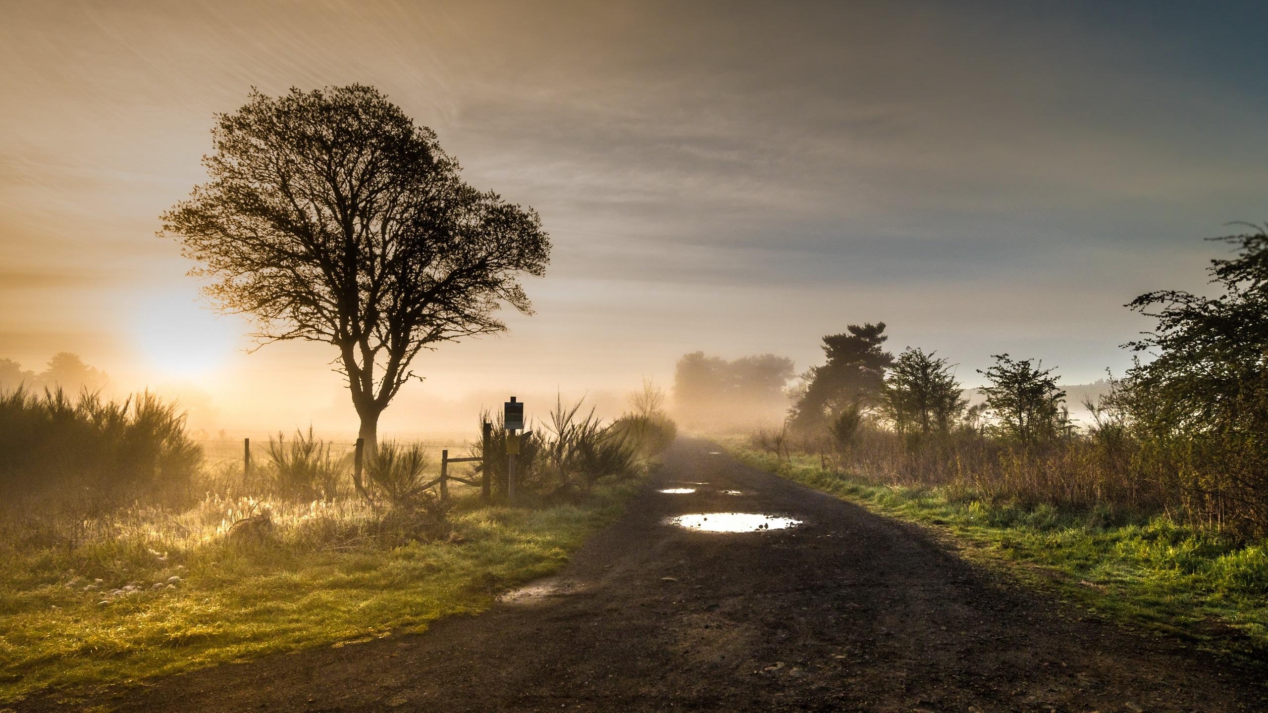 Рассвет туман дорога деревья скачать