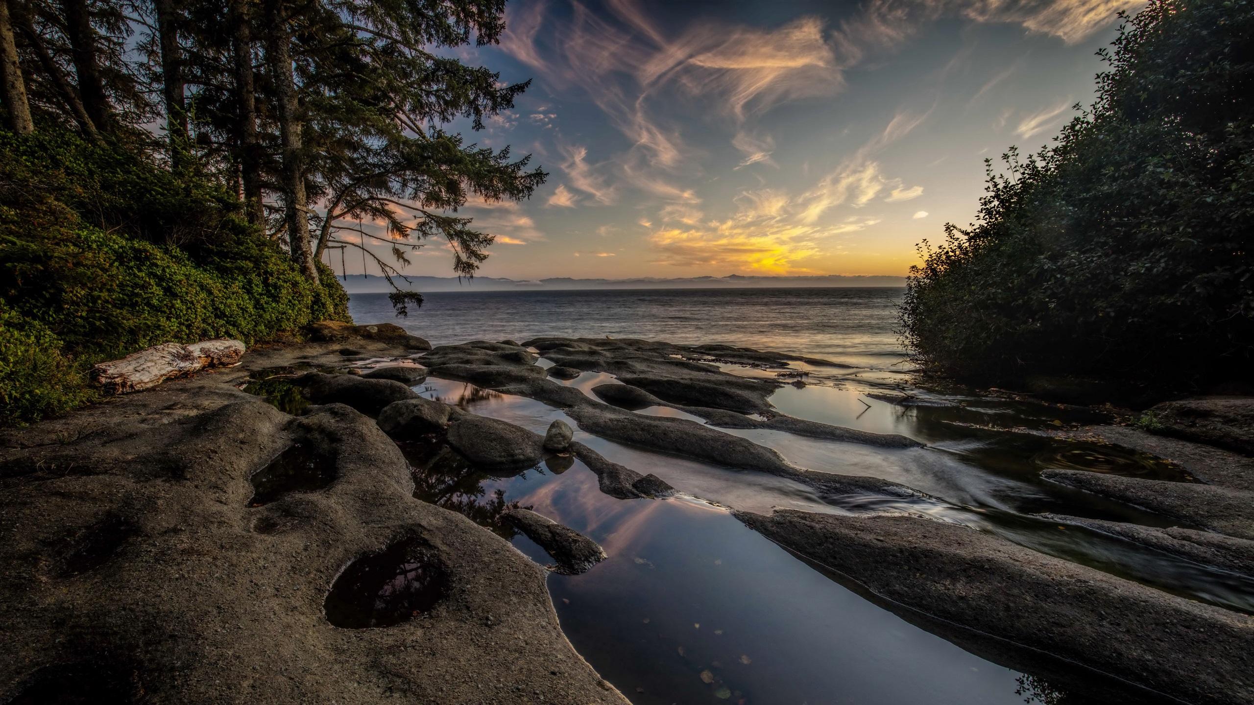 Wallpaper Canada, Vancouver Island, Fog, Sea, Coast, Trees