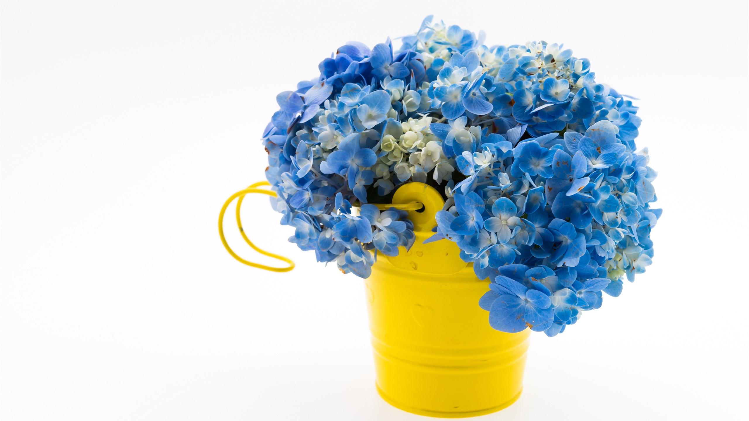 Fonds Décran Hortensia Bleu Bouquet Seau Jaune Fond
