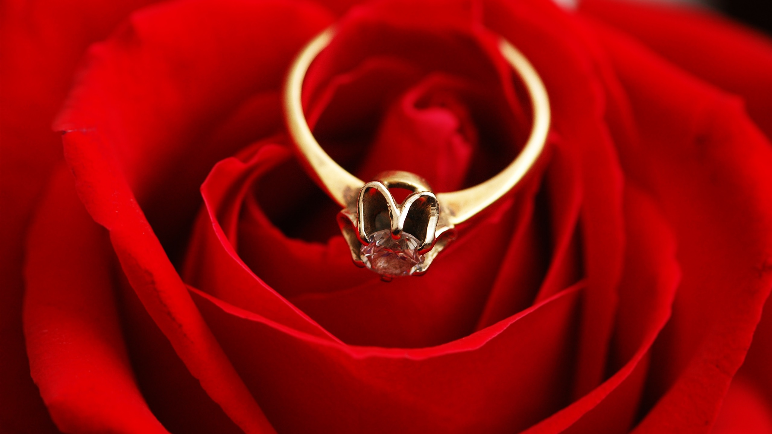 Gold Ring Diamond Red Rose 750x1334 Iphone 8 7 6 6s Wallpaper