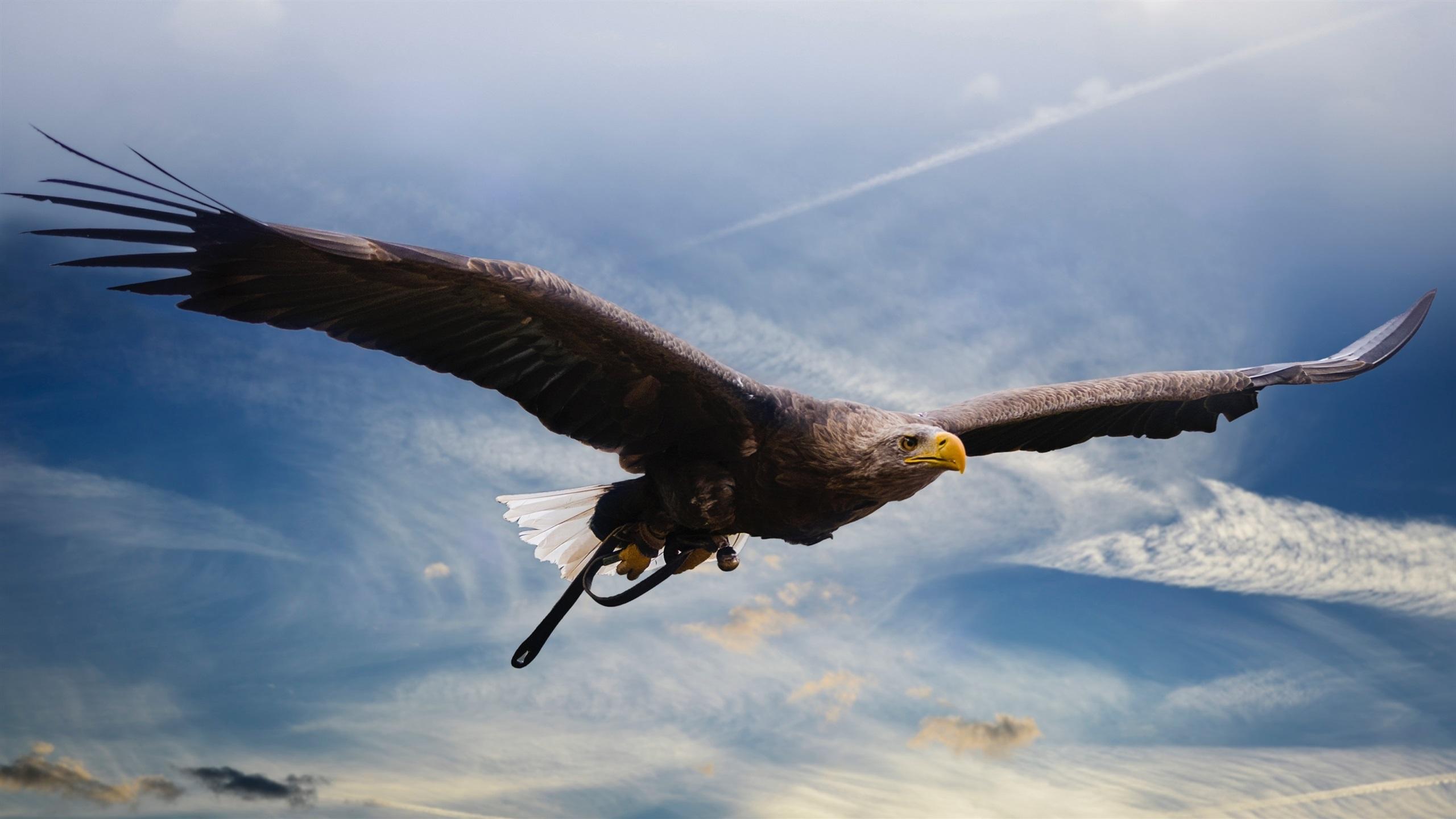 Fonds d 39 cran vol de l 39 aigle pr dateur ailes ciel for Fond ecran qhd