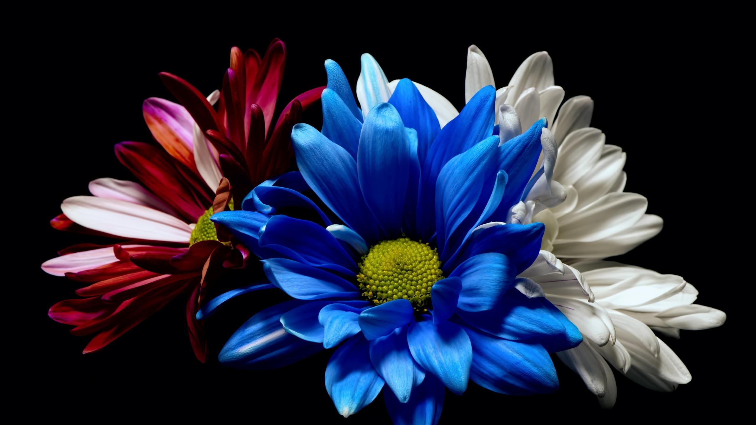 Blue Flower Wallpaper White Background