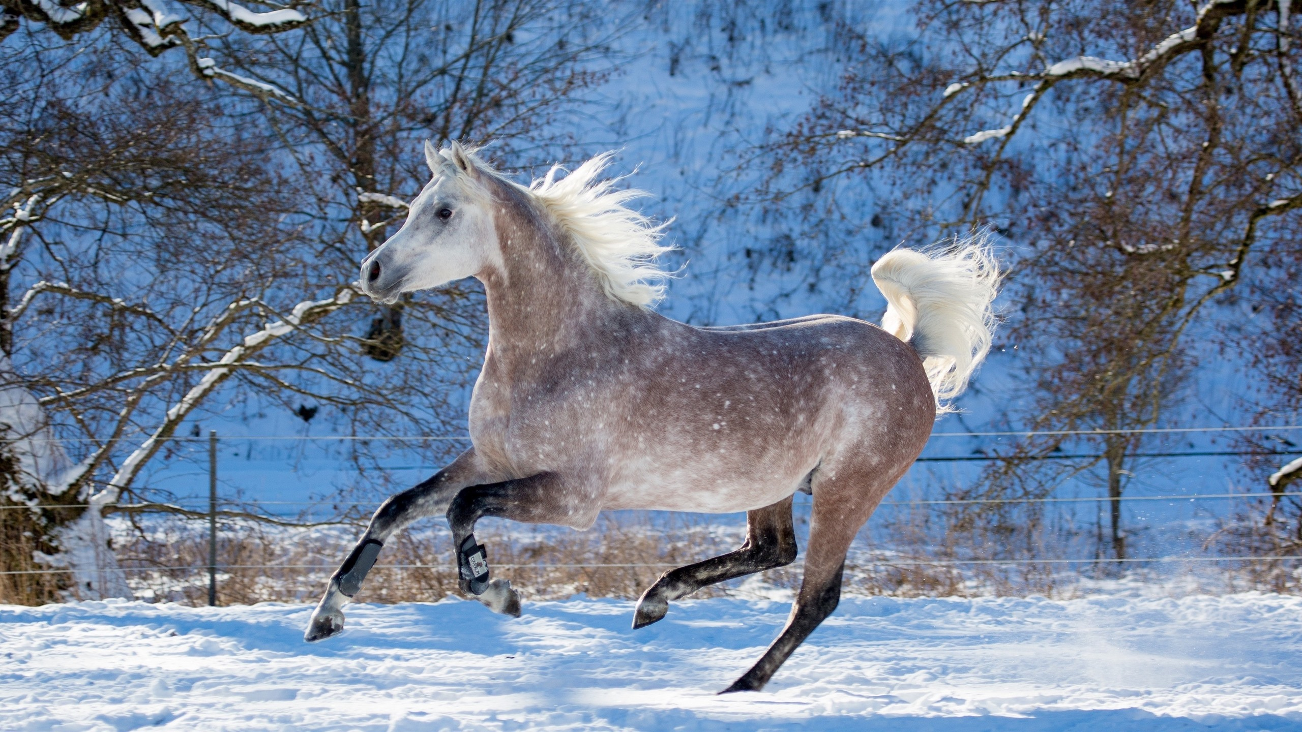 Wallpaper Horse Running Winter Snow Trees 3840x1200 Multi