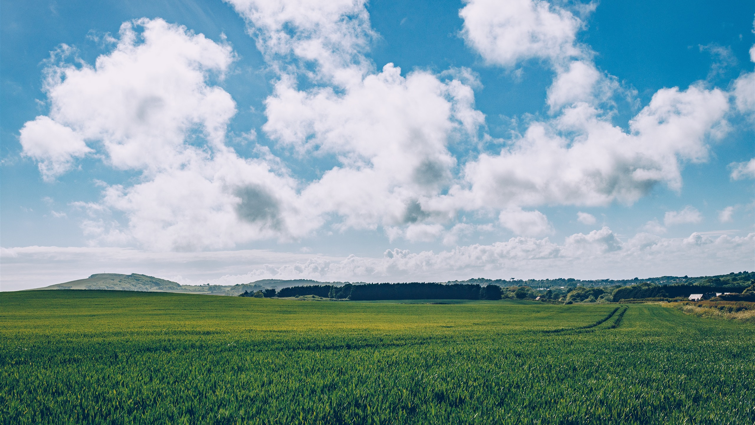 Green Fields Blue Sky White Clouds Countryside 1242x2688
