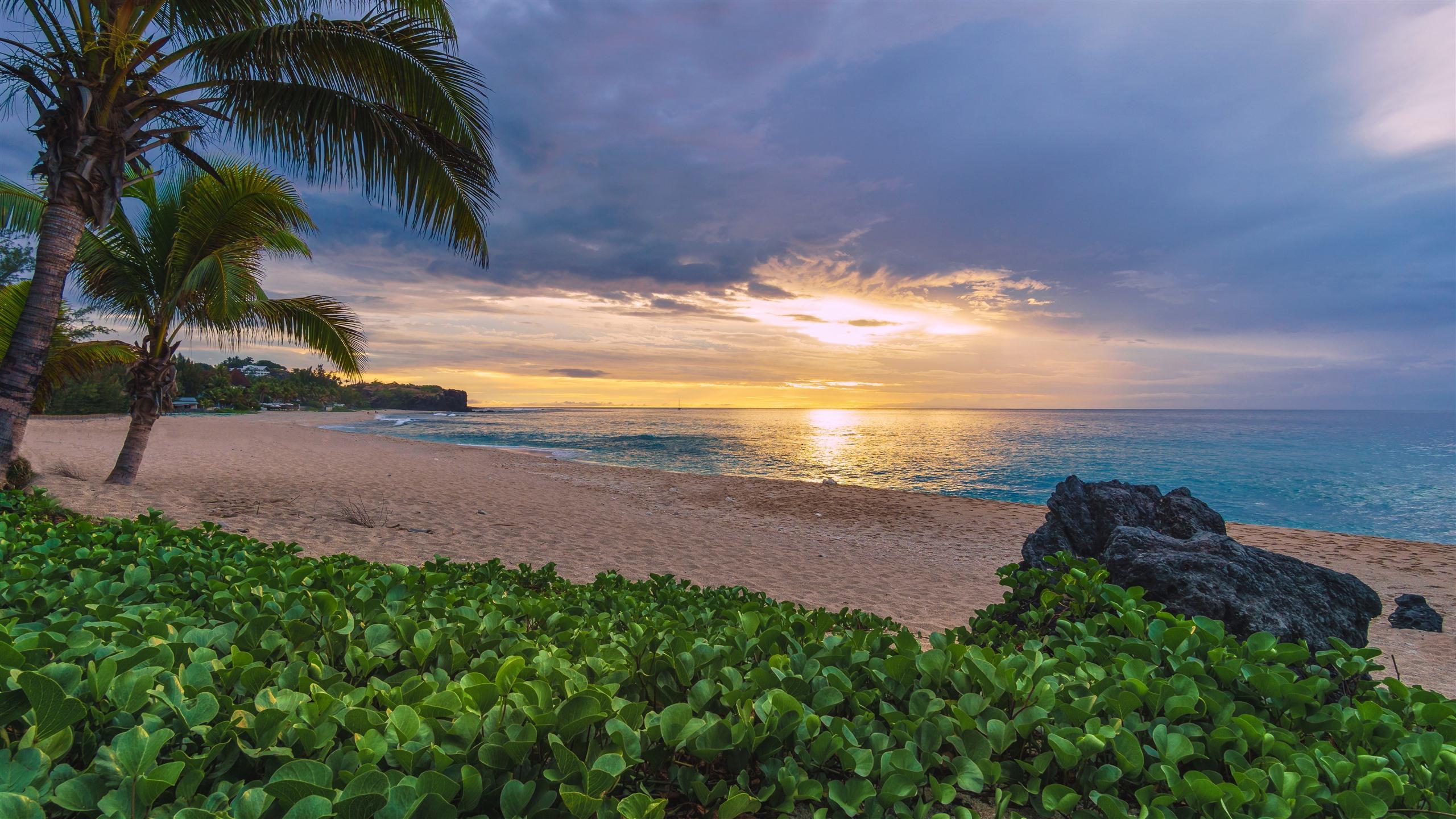 Wallpaper Caribbean Sea Beach Sunset Palm Trees Hd 5k: 배경 화면 프랑스, 인도양, 바다, 해변, 야자수, 식물, 일몰 5120x2880 UHD 5K 그림, 이미지