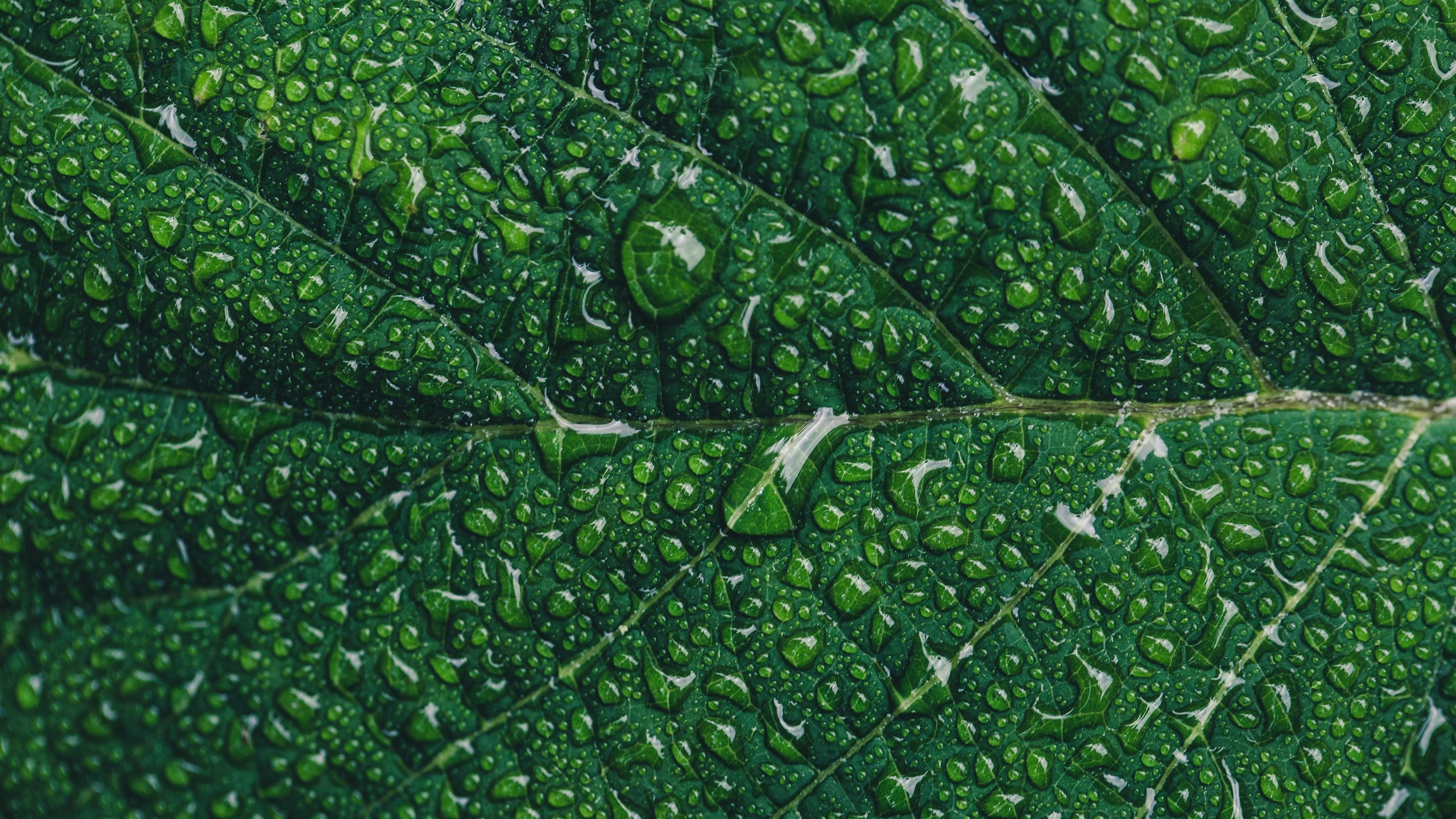 Green Leaf Close Up Water Droplets Texture 1242x2688