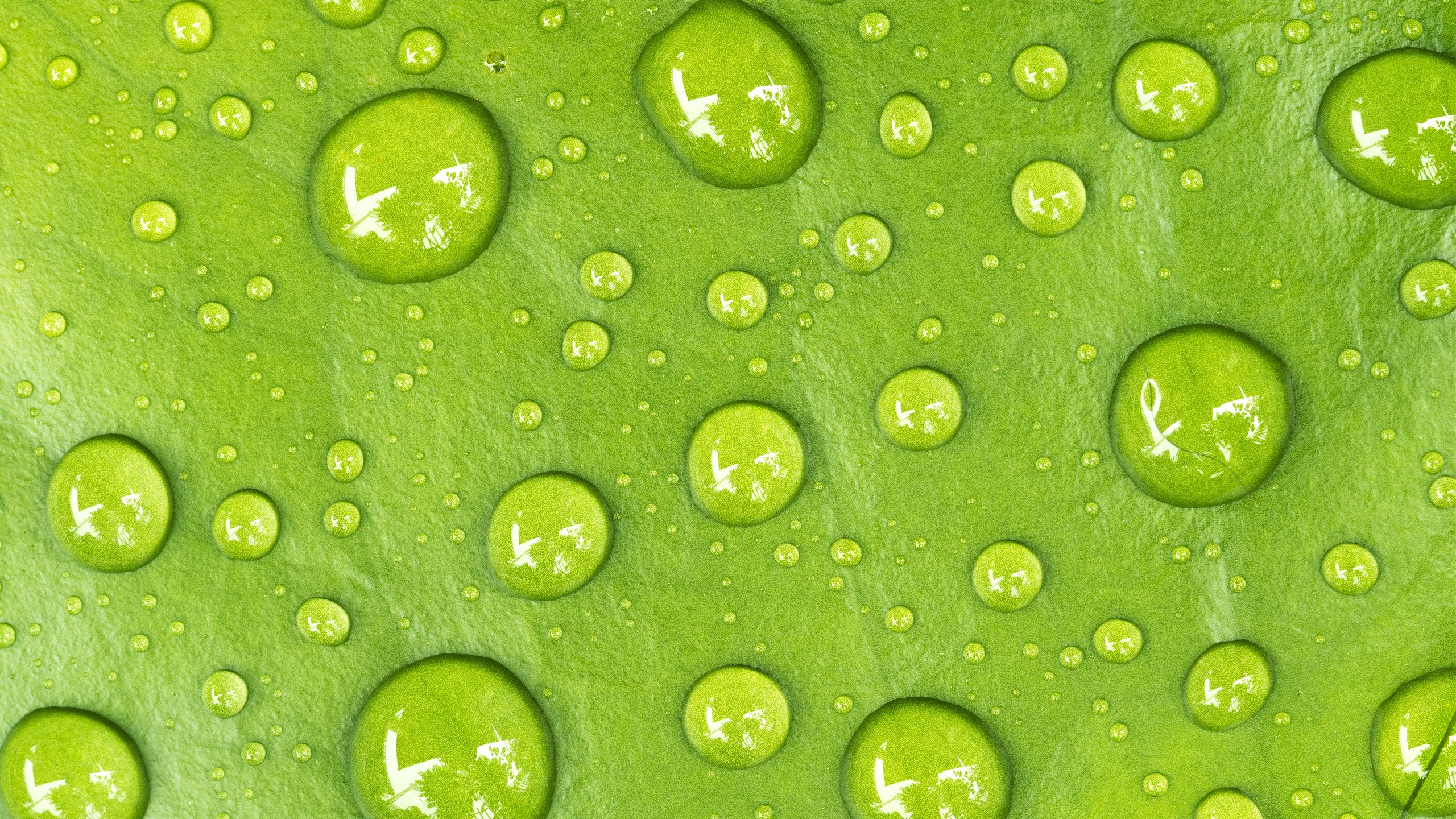 Green Leaf Water Droplets Macro Photography 1242x2688