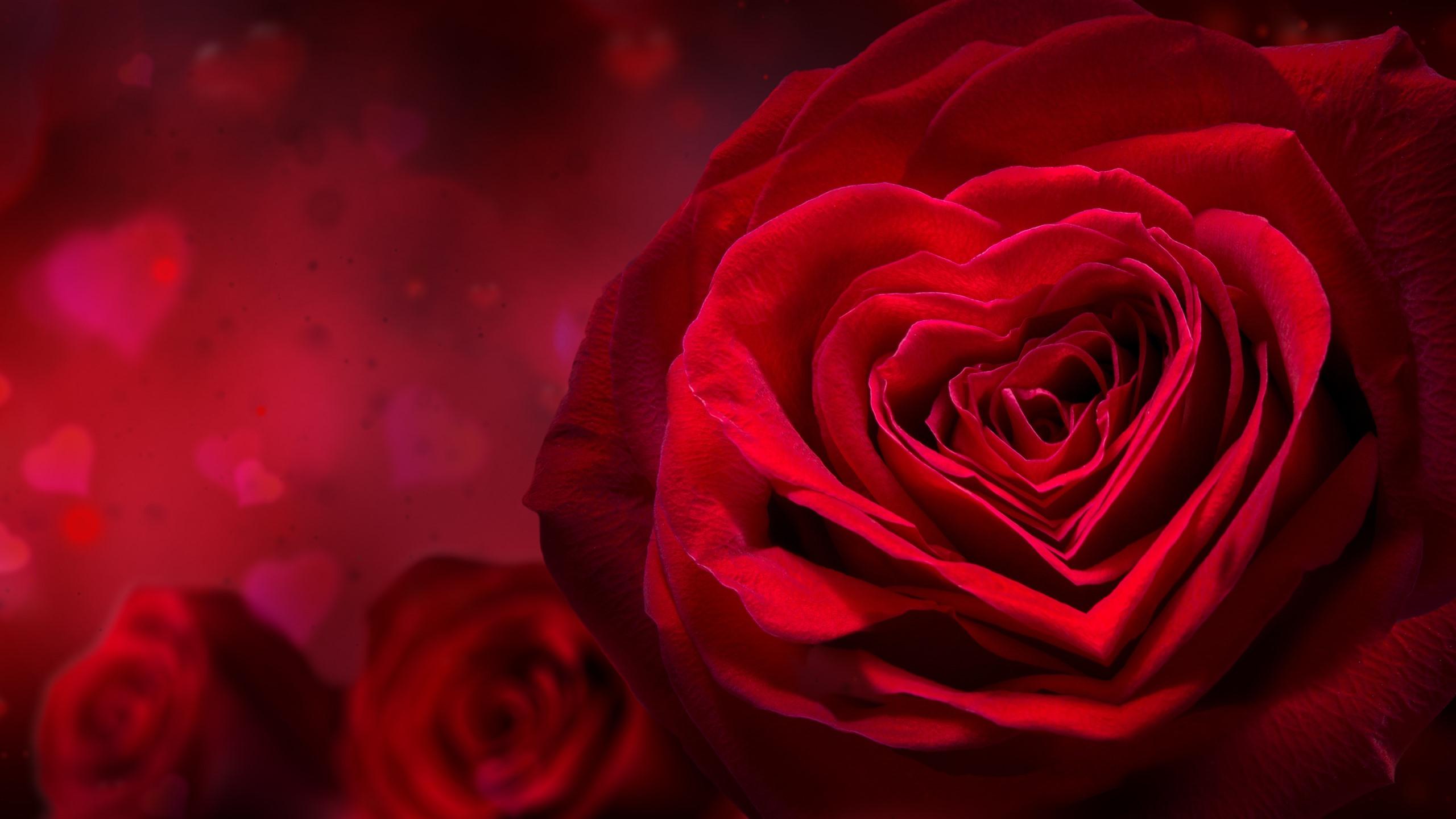 Wallpaper Red Rose Love Heart Petals Romantic 5120x2880
