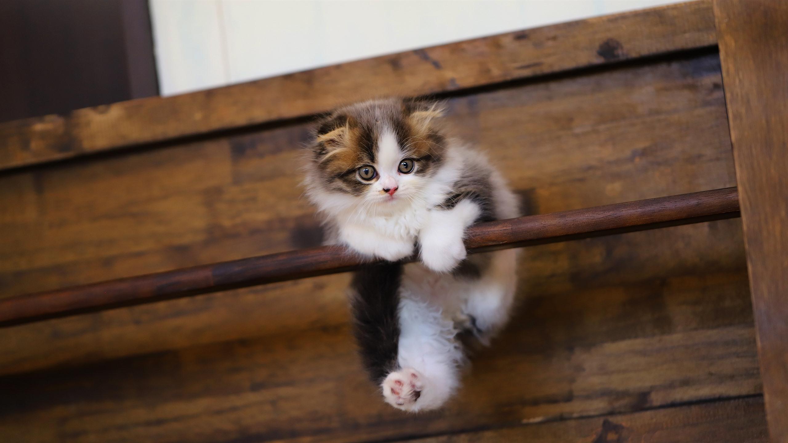 счастье котенок висит картинки конечном итоге мэттью