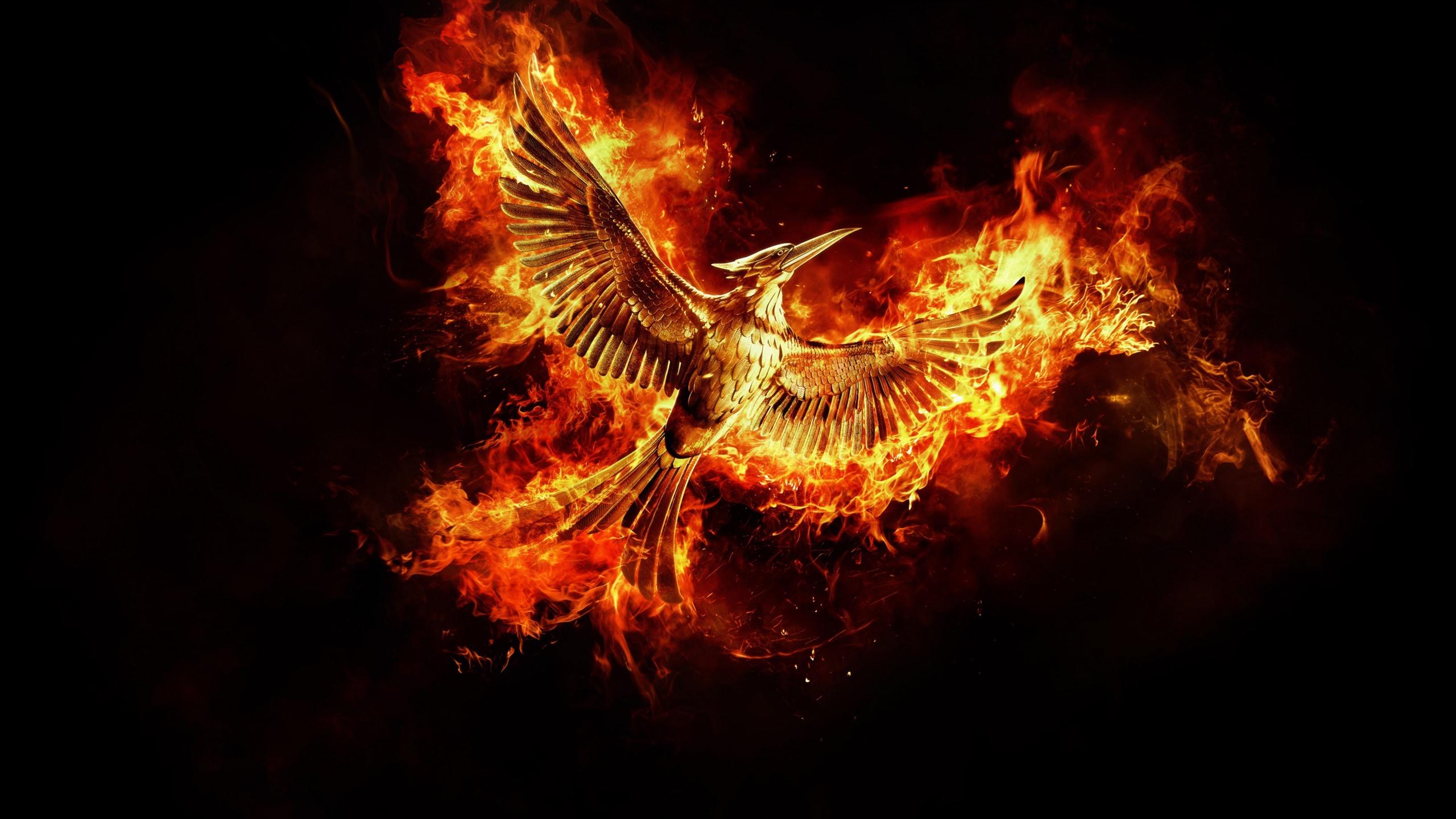 Обои крылья, феникс. Животные foto 14