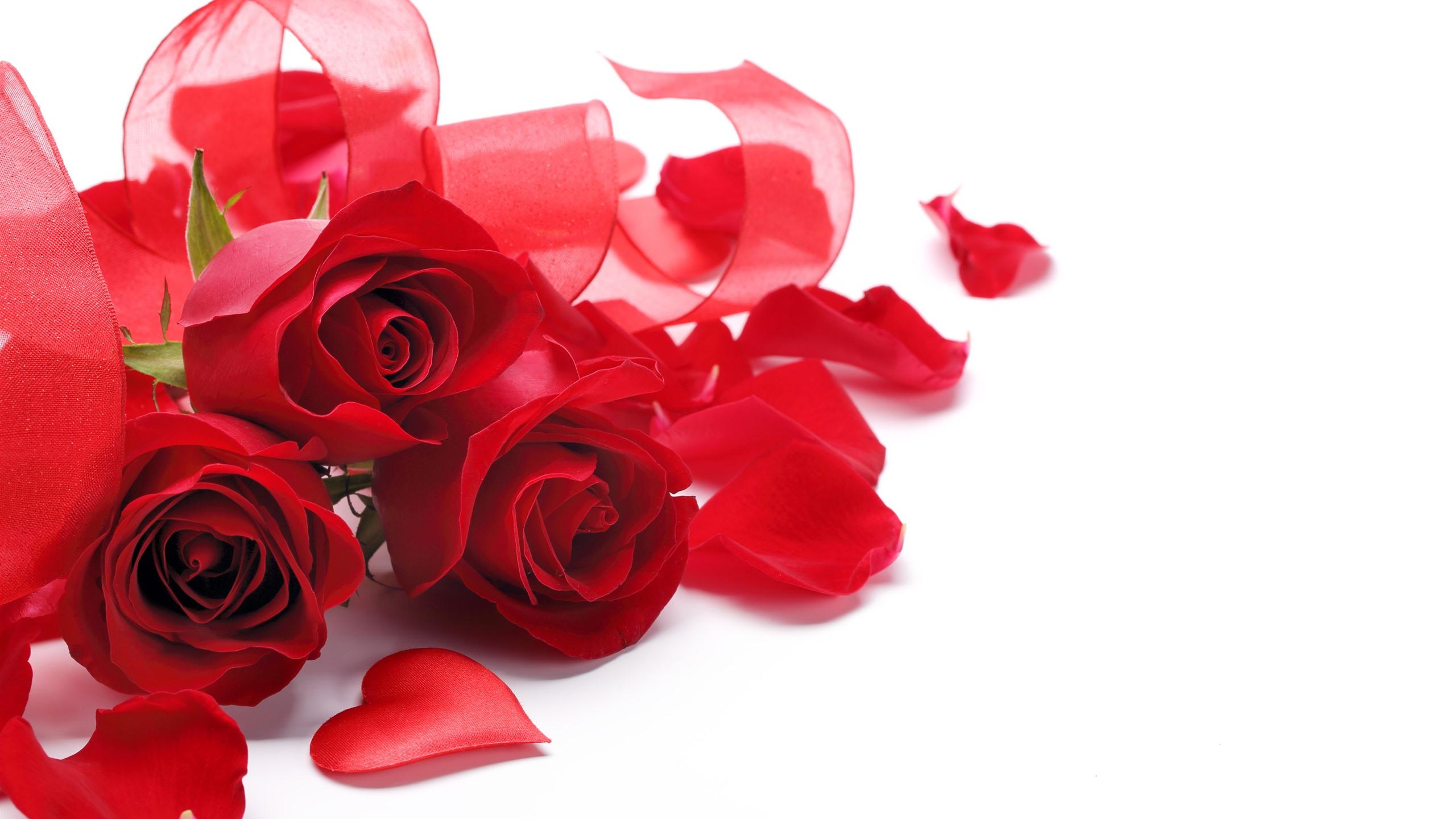 Fonds Décran Roses Rouges Bouquet Ruban Fond Blanc