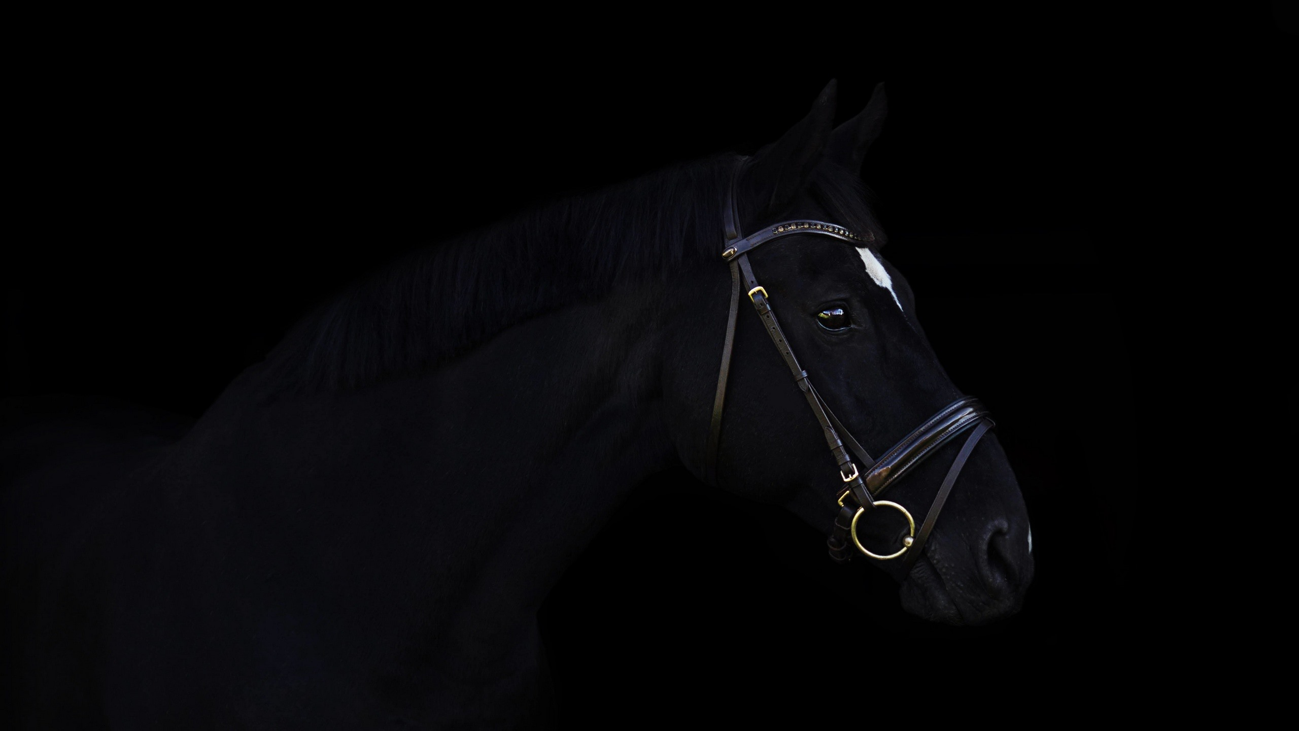 Wallpaper Black Horse And Black Background 2560x1440 Qhd