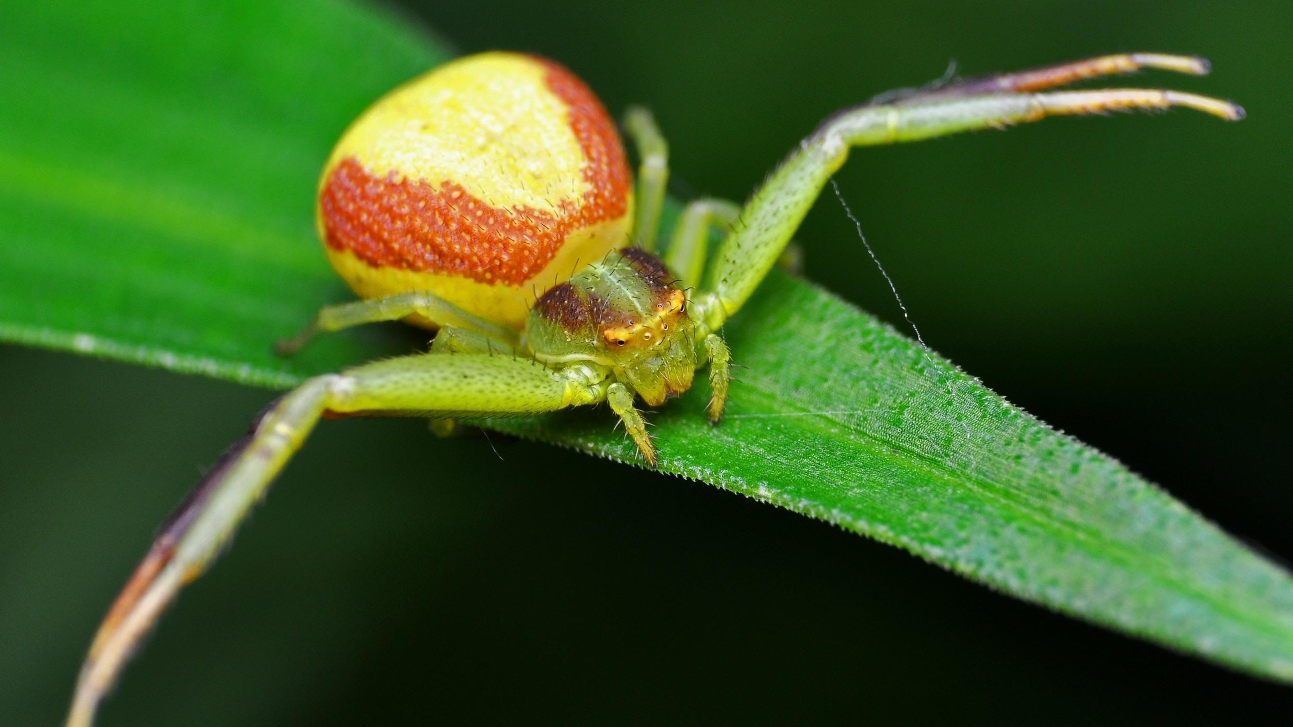Обои насекомое, паук, лист. Макро foto 19