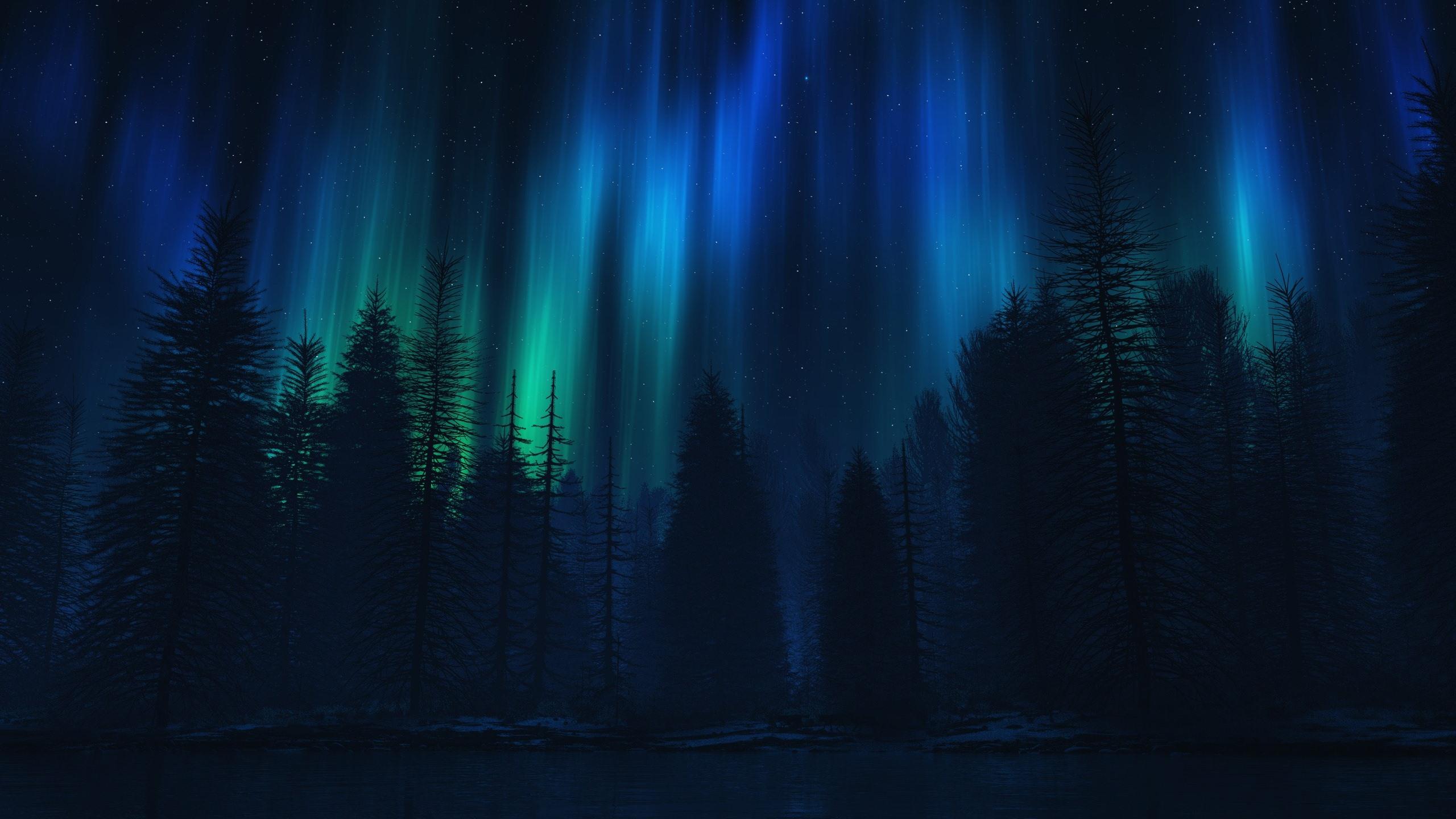 壁紙 オーロラ 木 夜 シルエット 2560x1440 Qhd 無料のデスクトップの背景 画像