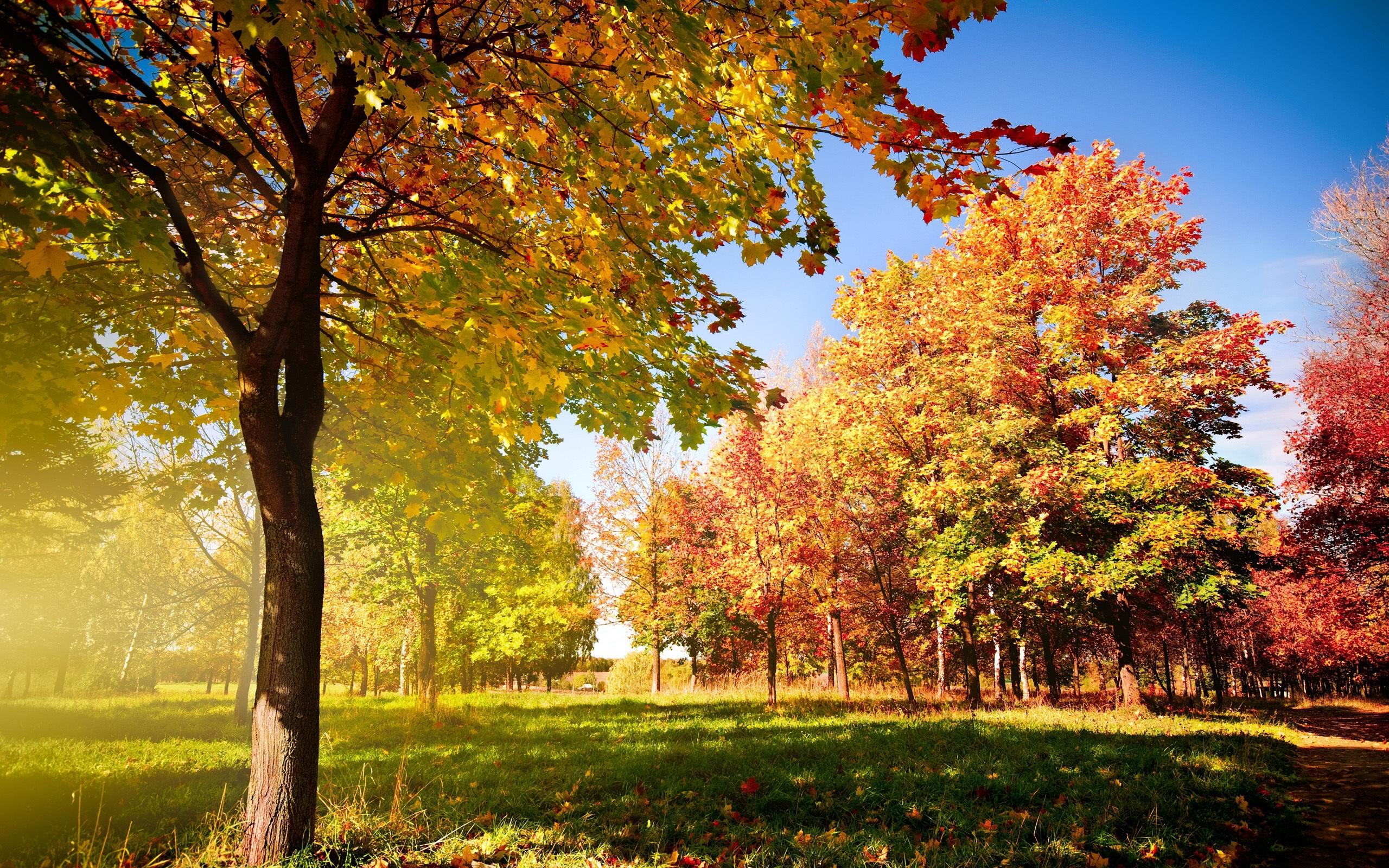 壁纸 秋天的树木和叶子 2560x1600 HD 高清壁纸, 图片, 照片