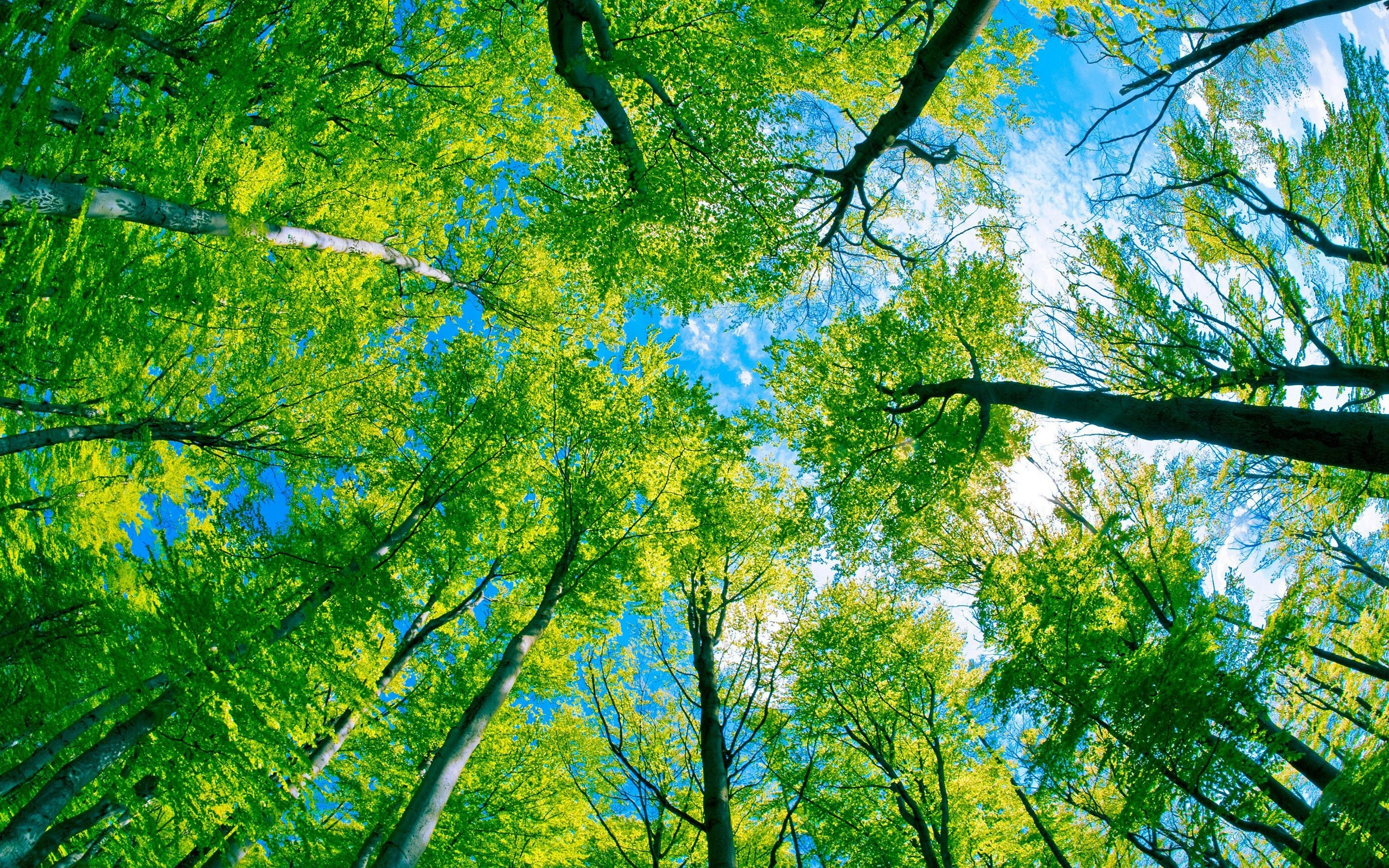 Forest trees green paradise 2560x1600