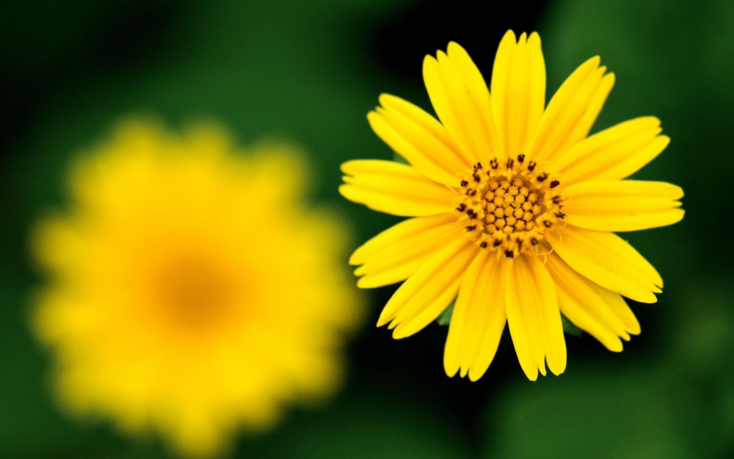 желтые цветы без смс