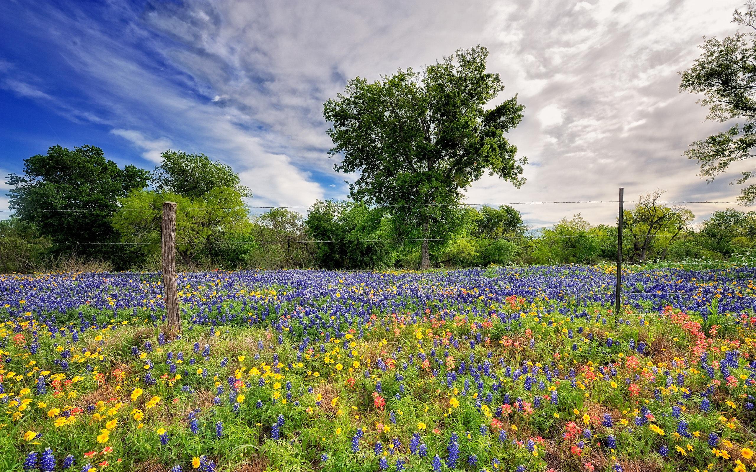 природа цветы весна без смс