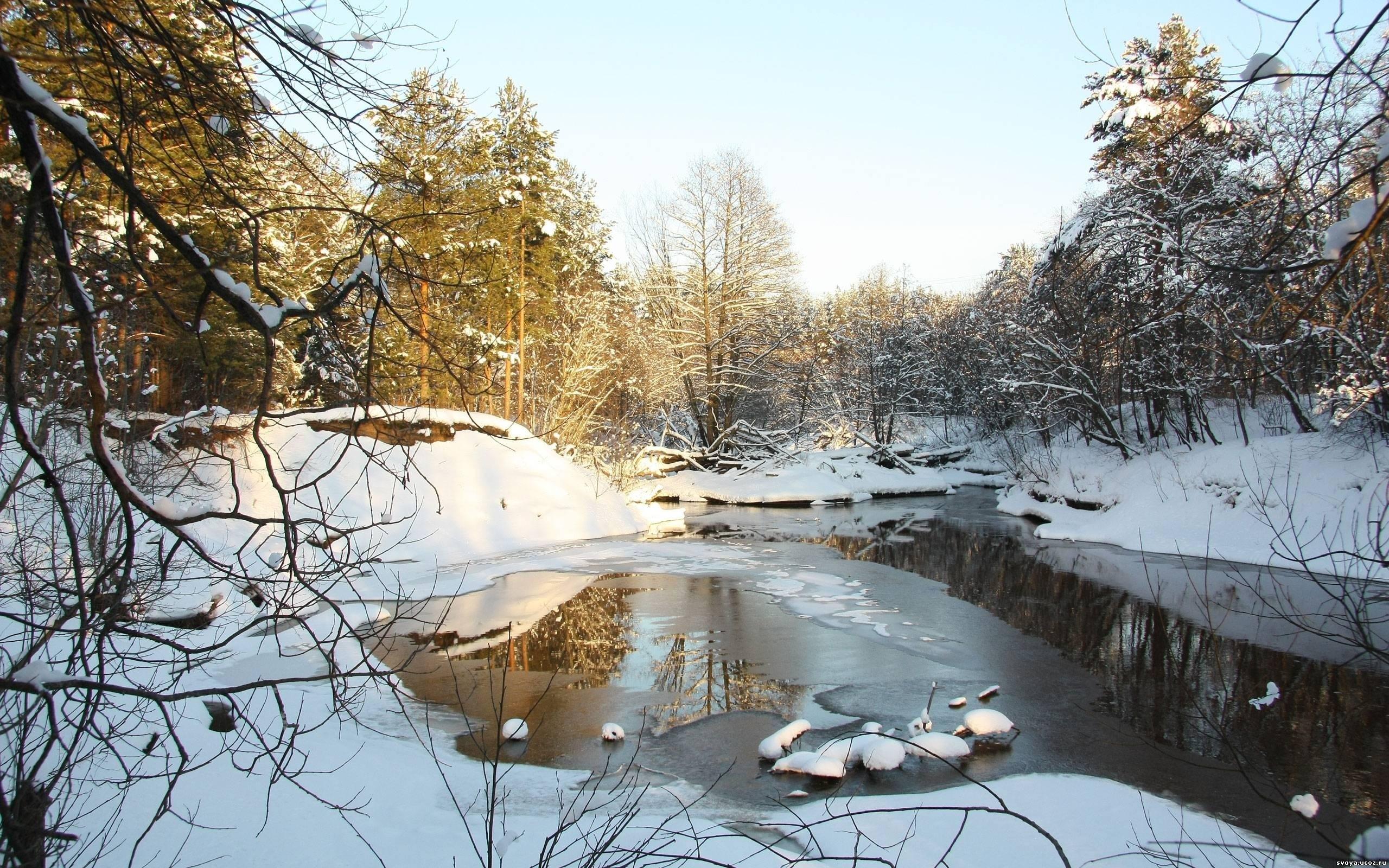 natur b ume schnee im winter 2560x1600 hd hintergrundbilder hd bild. Black Bedroom Furniture Sets. Home Design Ideas