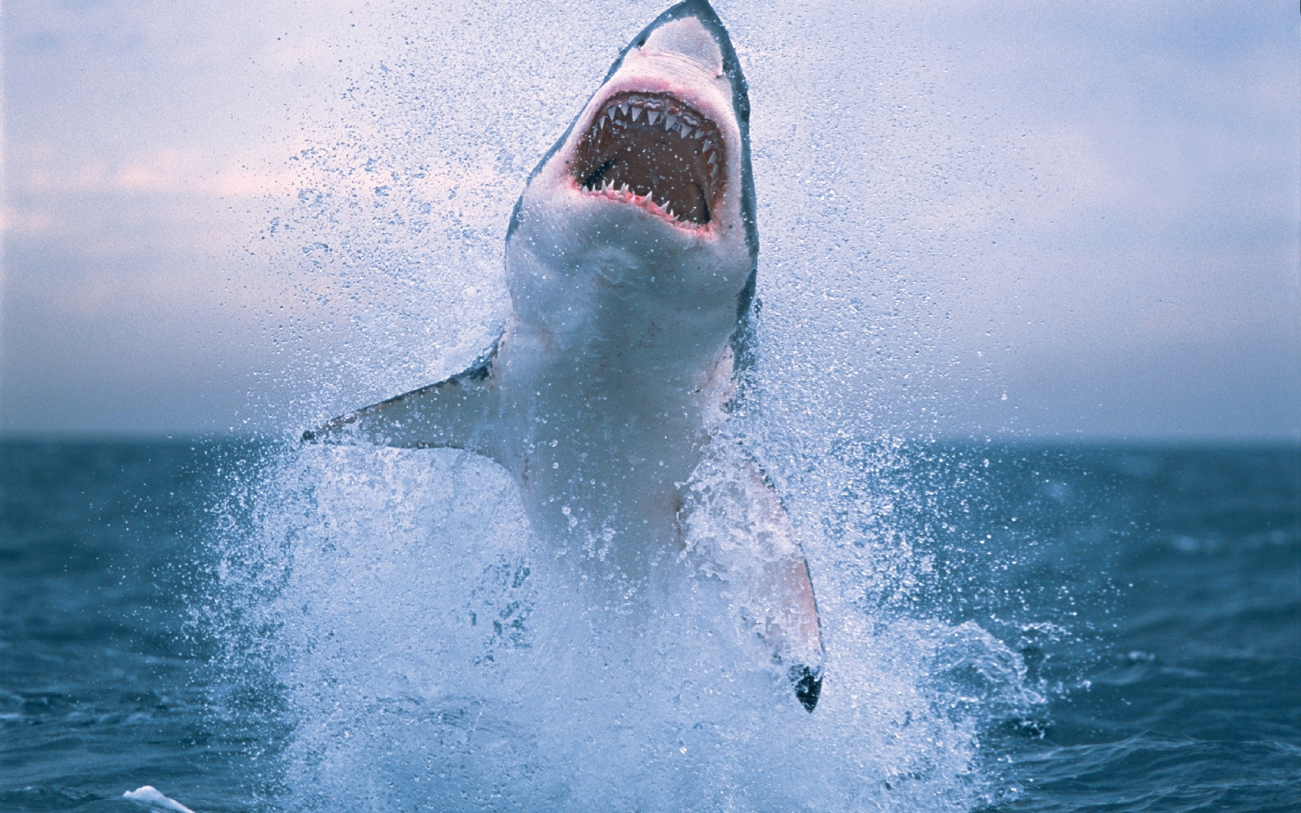 download wallpaper shark 1600 - photo #18