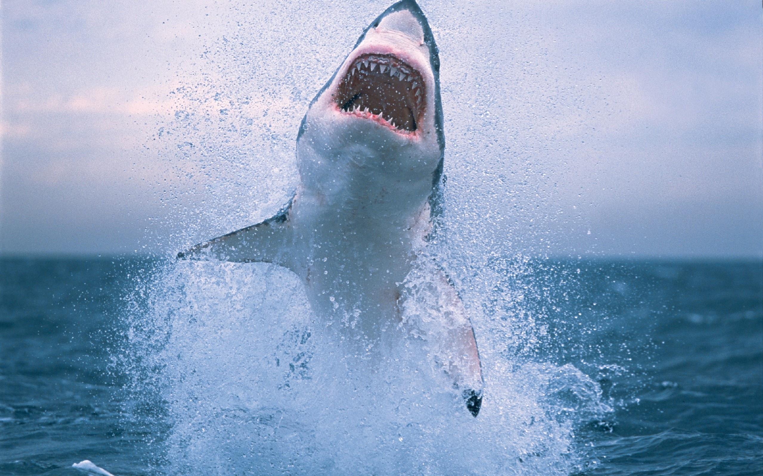 Papéis De Parede Tubarão Saltando Fora De água 2560x1600