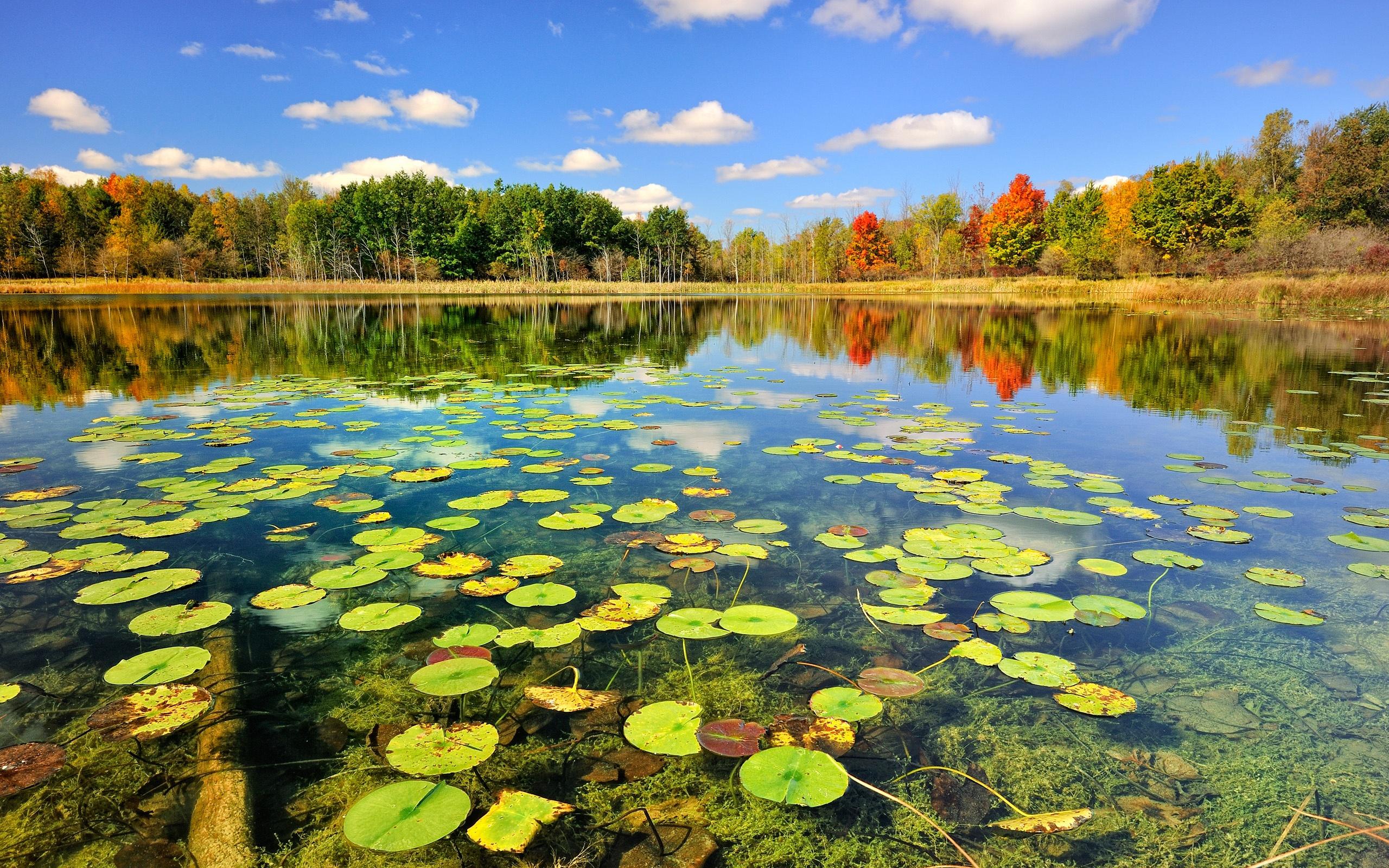 Natur herbst waldsee hintergrundbilder 2560x1600