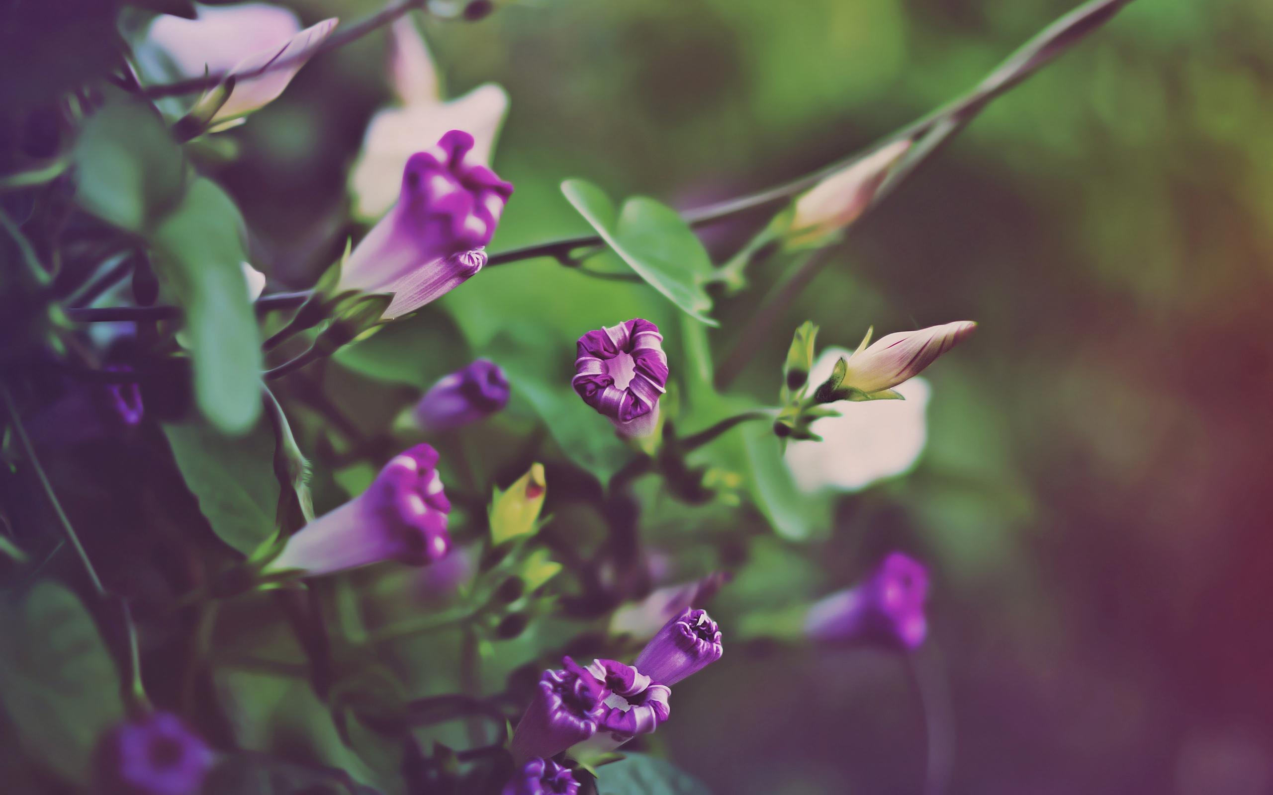 цветок фиолетово-зеленый макро скачать
