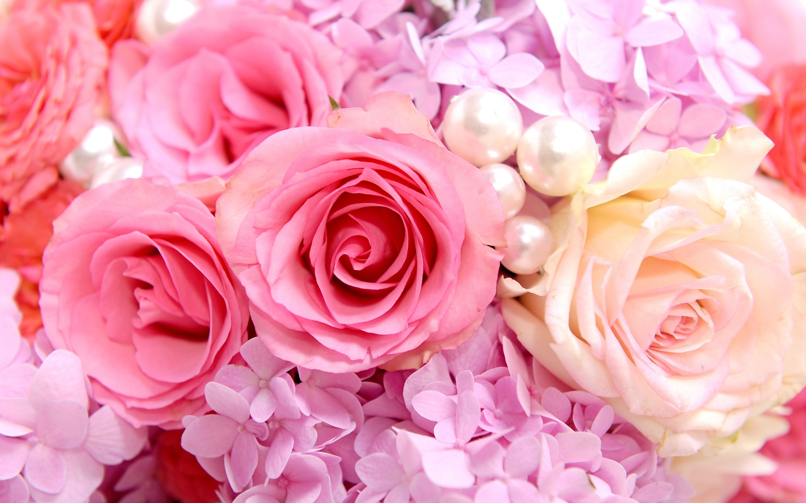 Download Hintergrundbilder 2560x1600 Rosa Rosen ... Pink Roses Wallpaper Tumblr