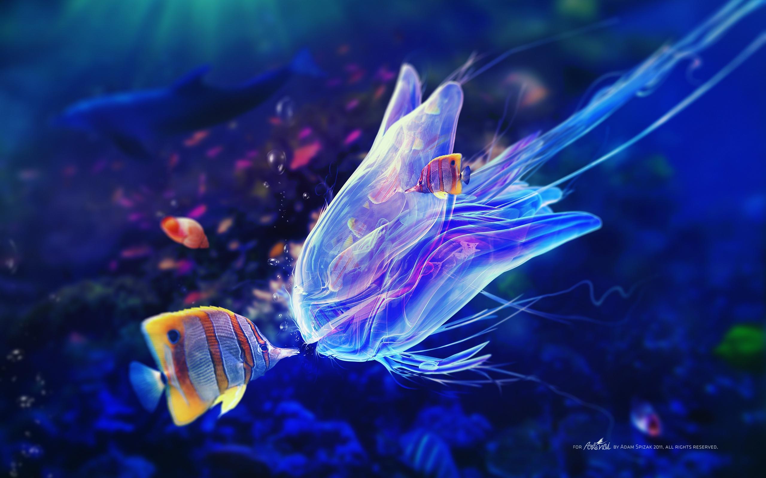 Wallpaper Underwater World Jellyfish And Clown Fish