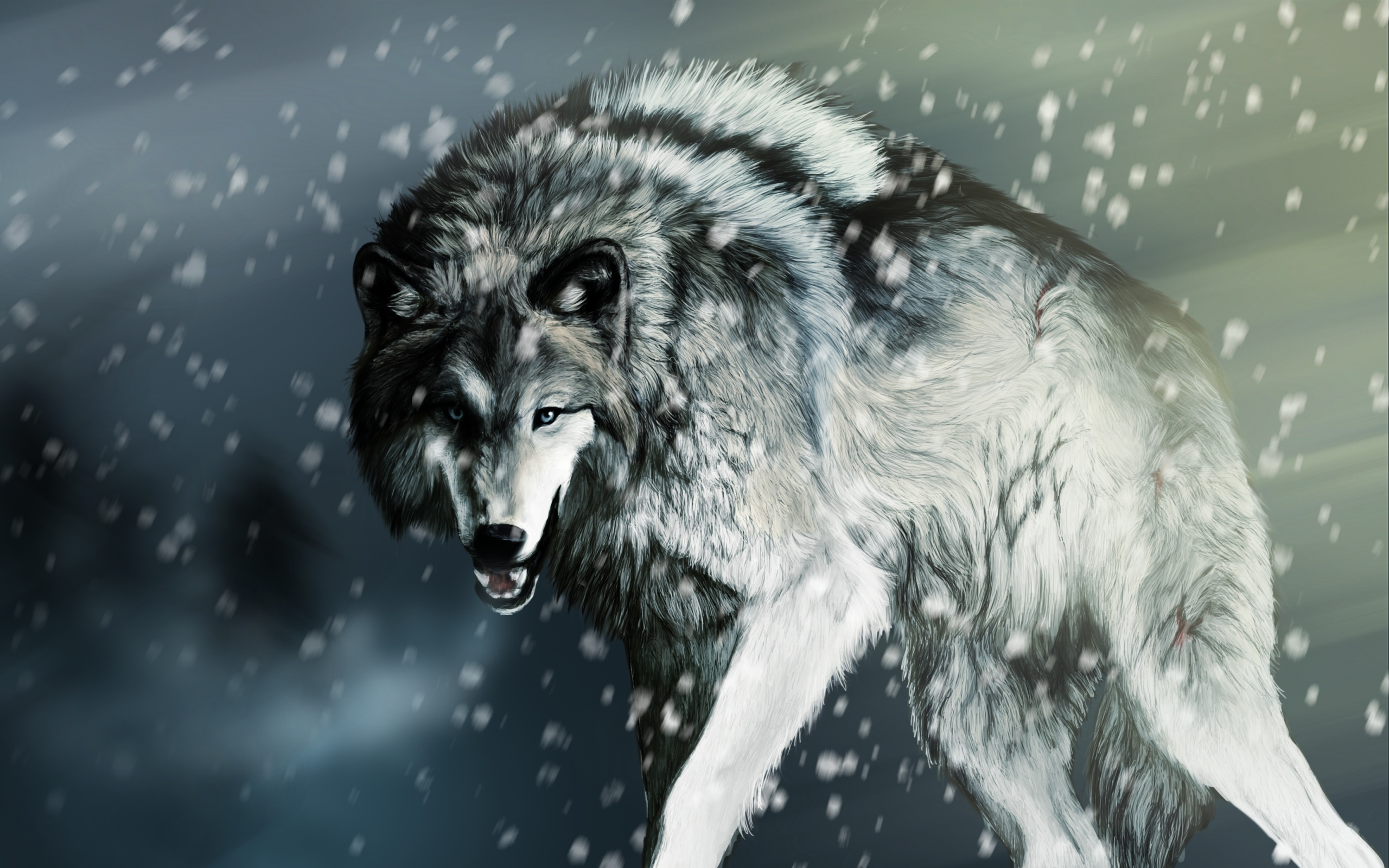 壁纸冬天负伤的狼2560x1600 Hd 高清壁纸 图片 照片