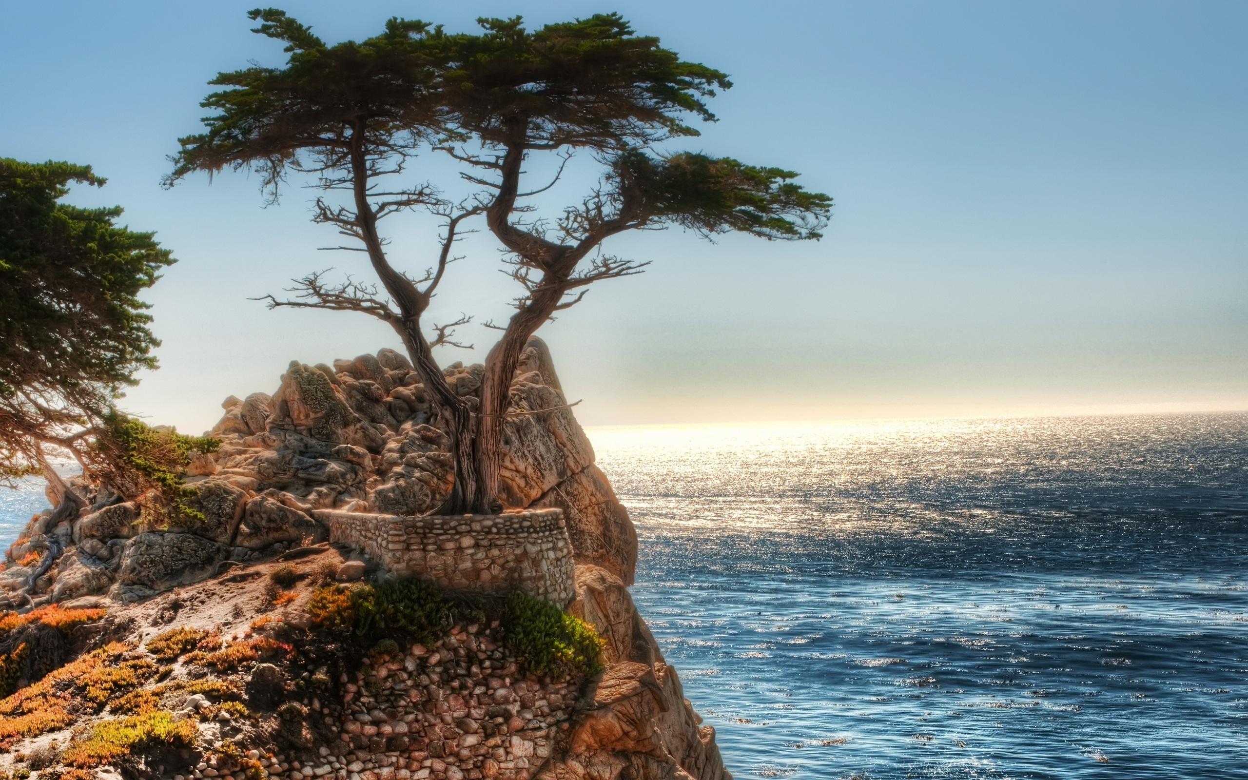 скалы обрыв деревья скачать