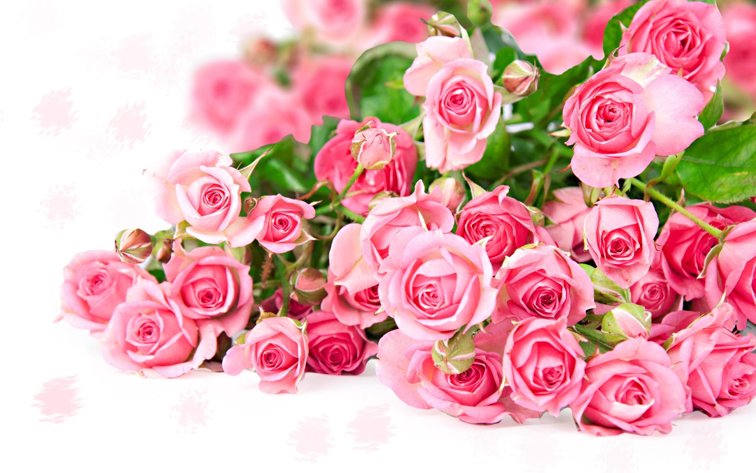 Wallpaper Pink Rose Flower Bouquet Romantic Color 2560x1600 Hd