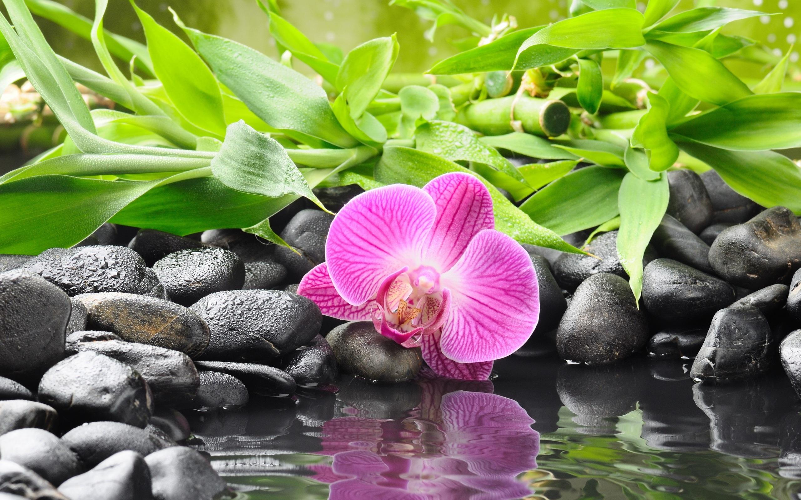 La orilla de gravilla negro, orquídeas moradas Fondos de pantalla , 2560x1600.