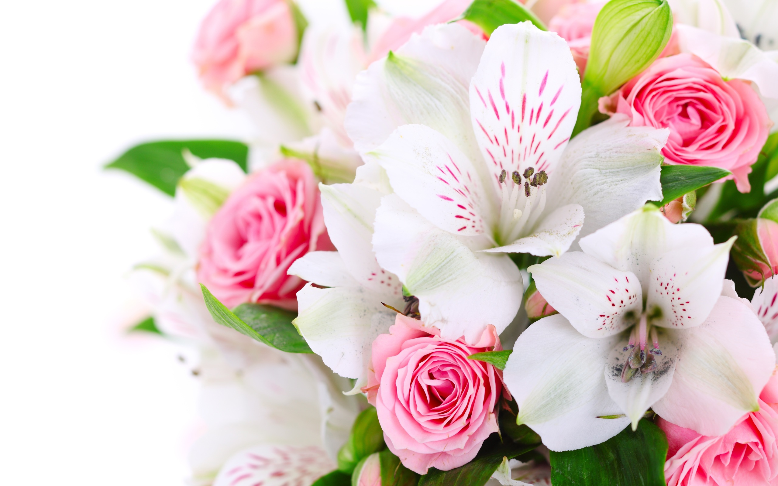 Wallpaper A Bouquet Flowers Pink Roses White Orchids 2560x1600 Hd