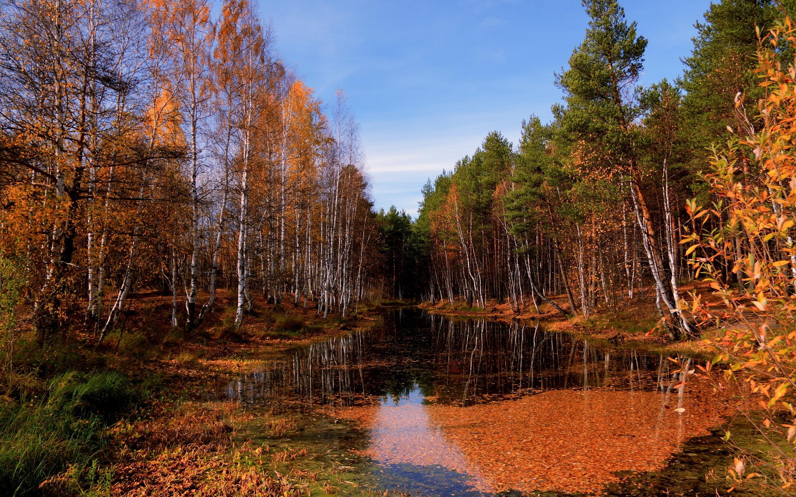 река лес  № 2789248 загрузить