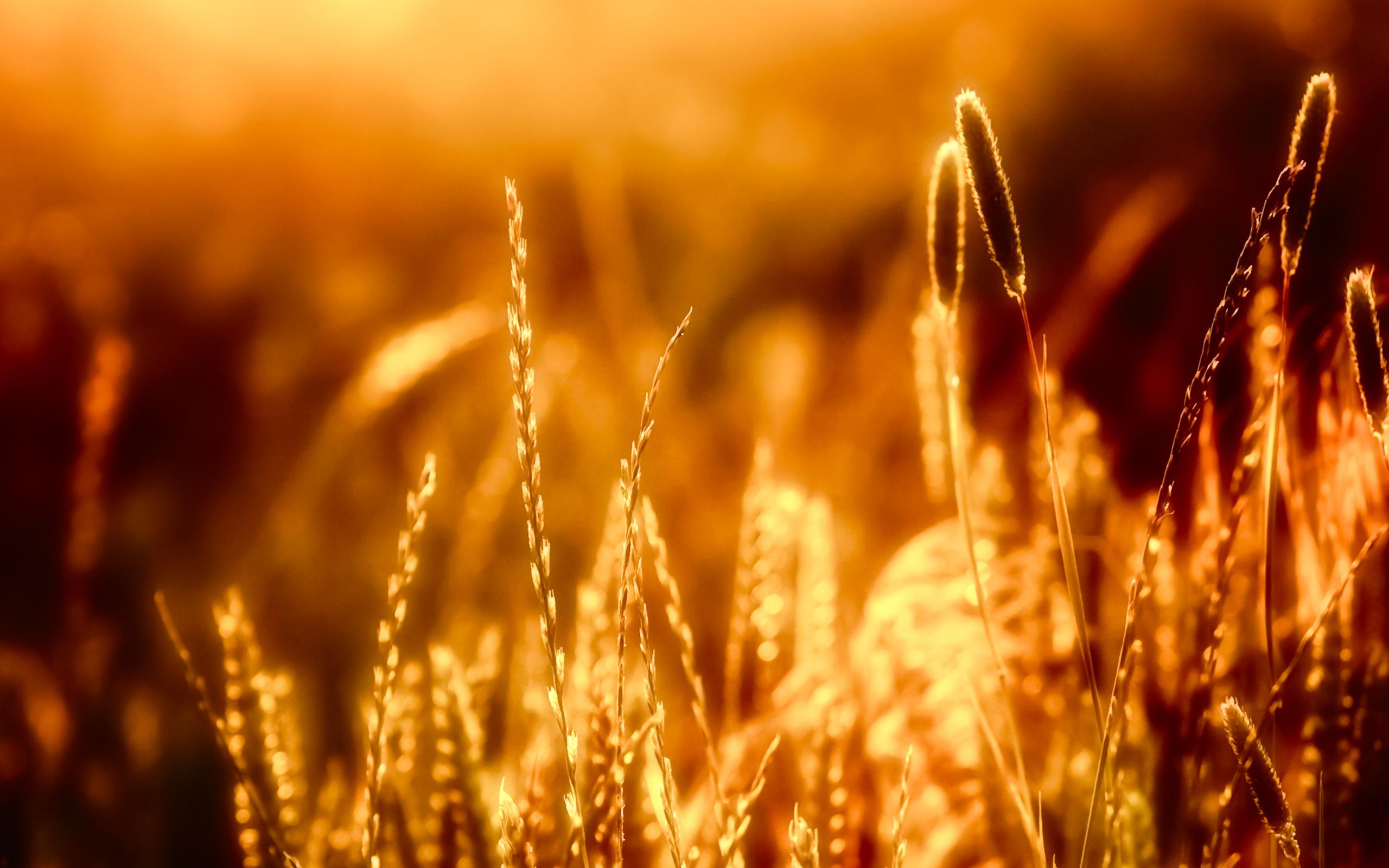 壁紙 クローズアップ草の暖かい太陽の下で 2560x1600 Hd 無料の